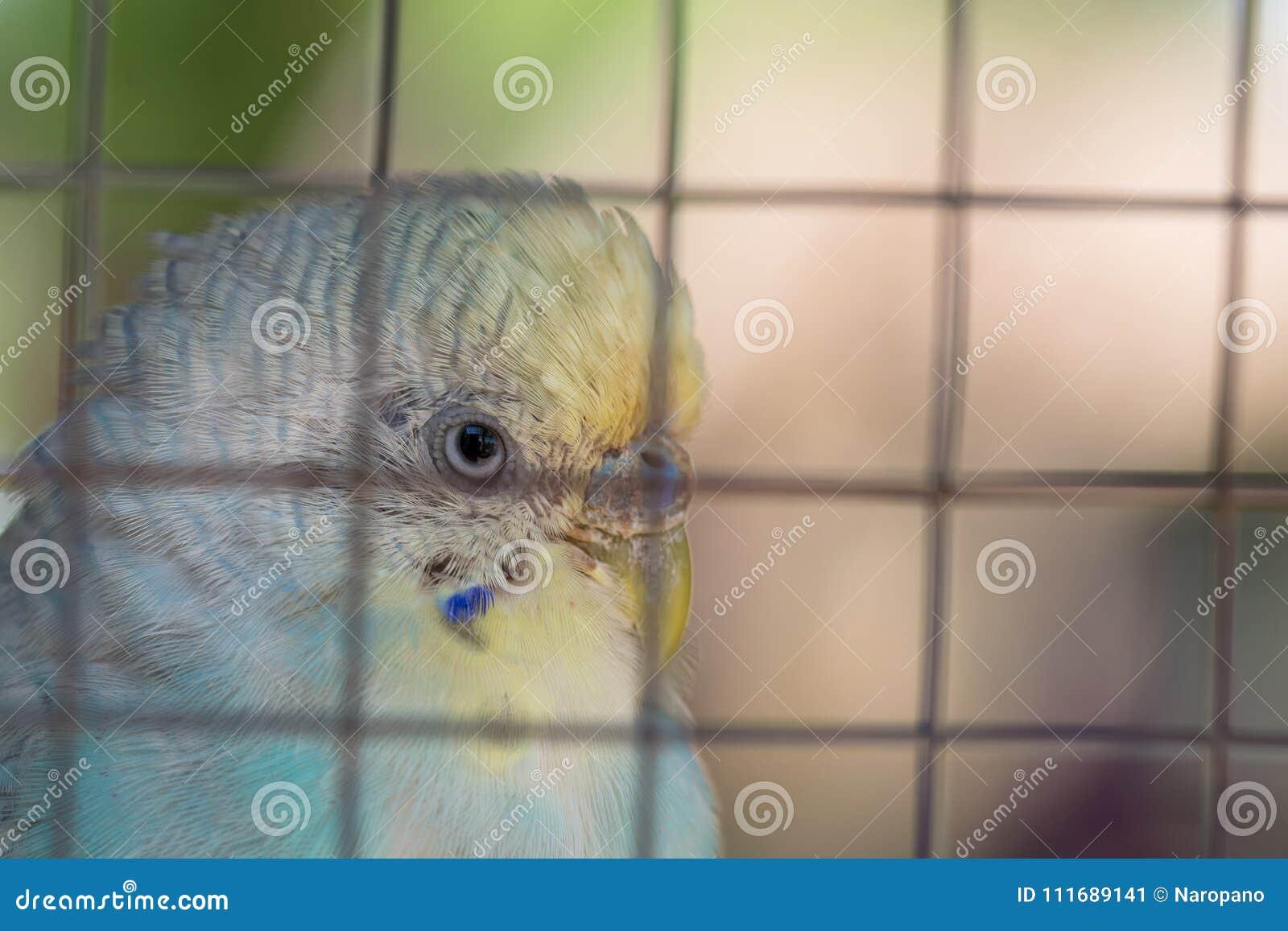 Клетка птицы