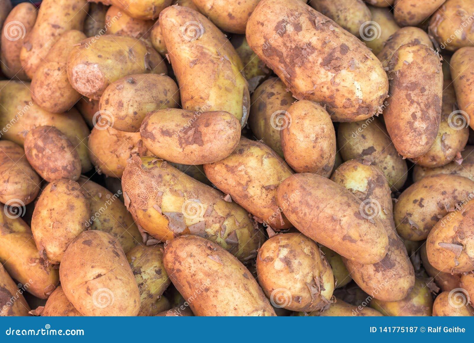 Клубни картошек после сбора