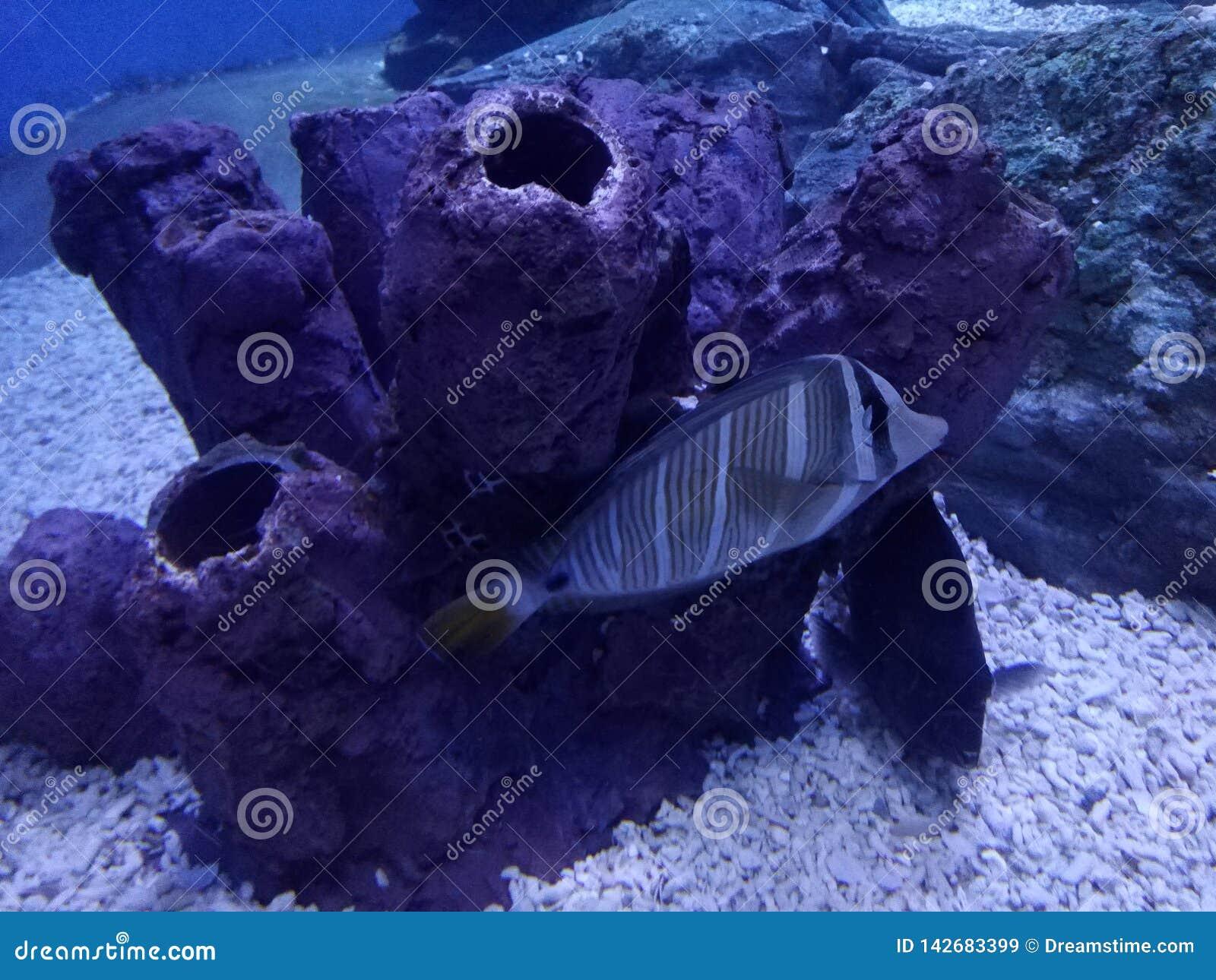 Книга Гиннесса мира моря мировых рекордов