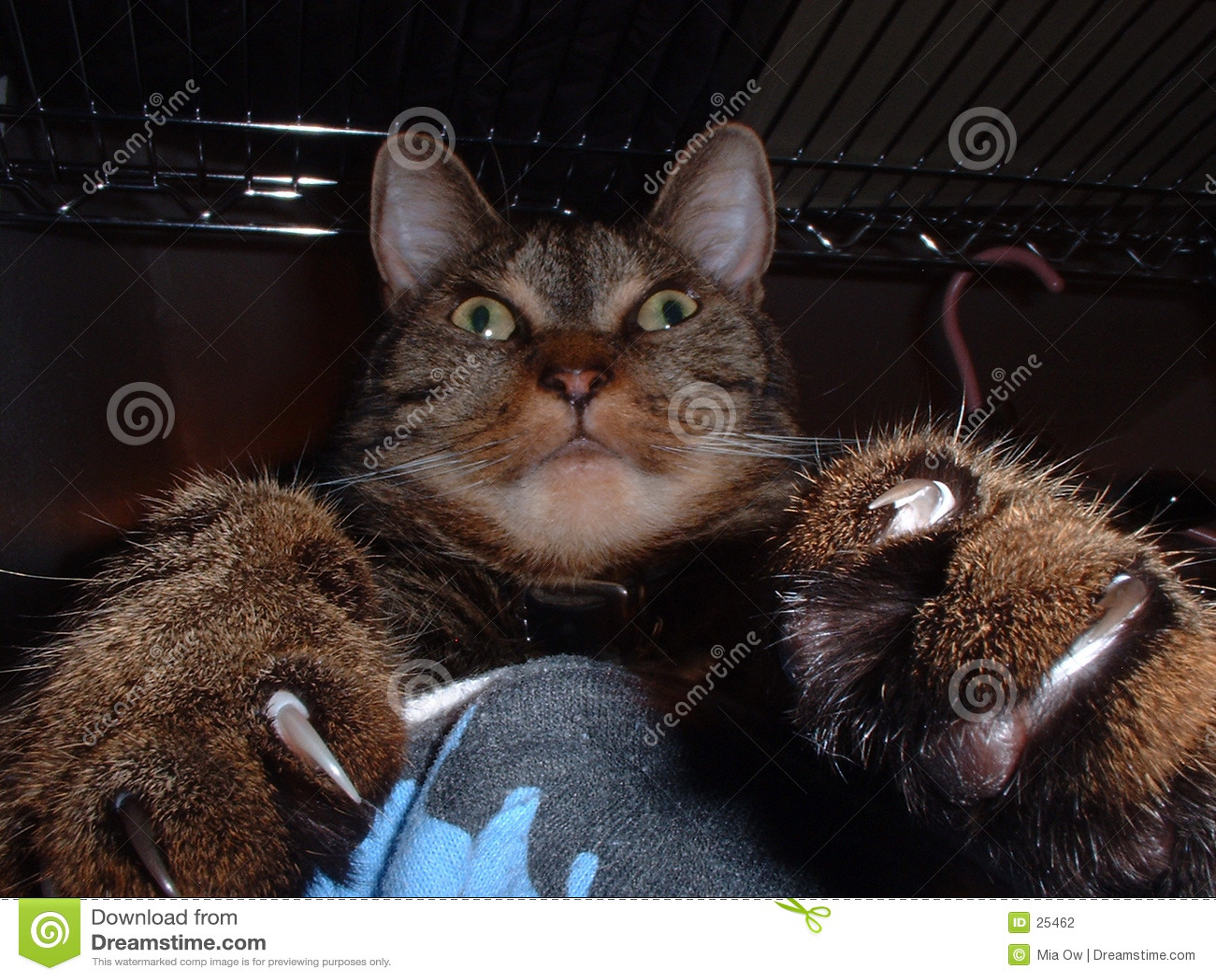 когти 1 кота