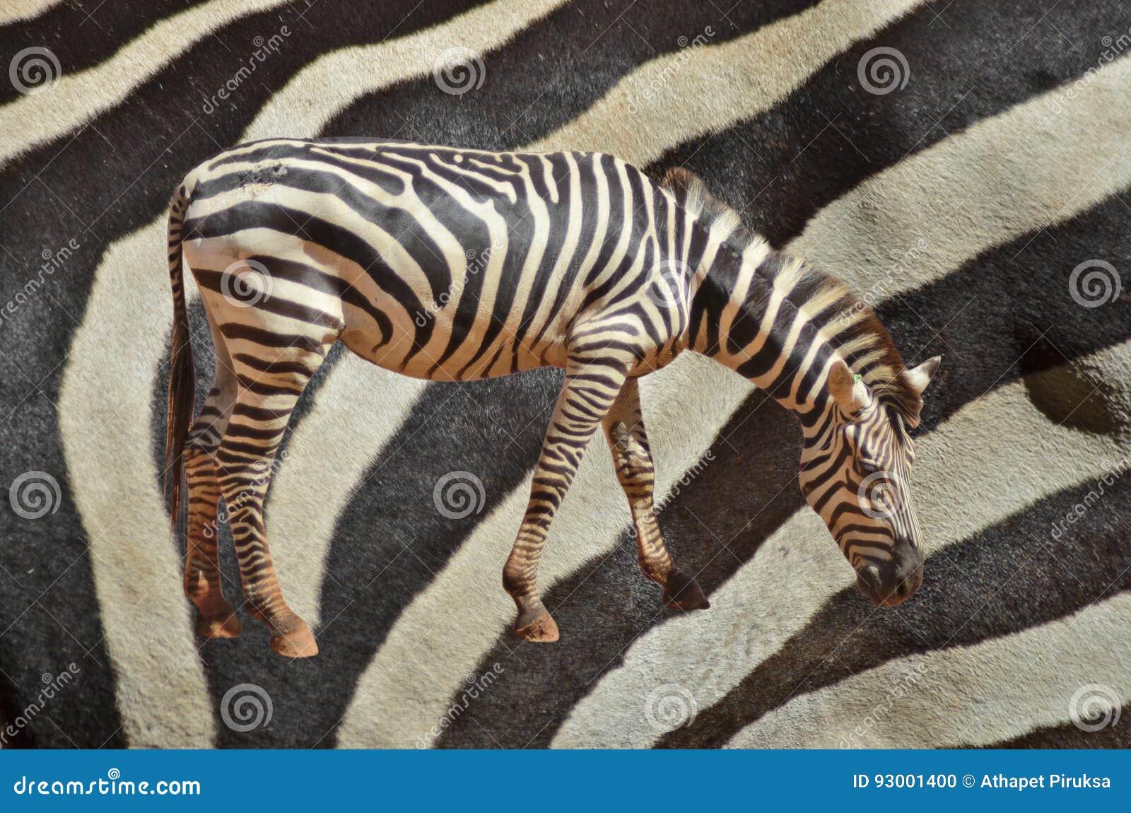 Кожа зебры и кожи
