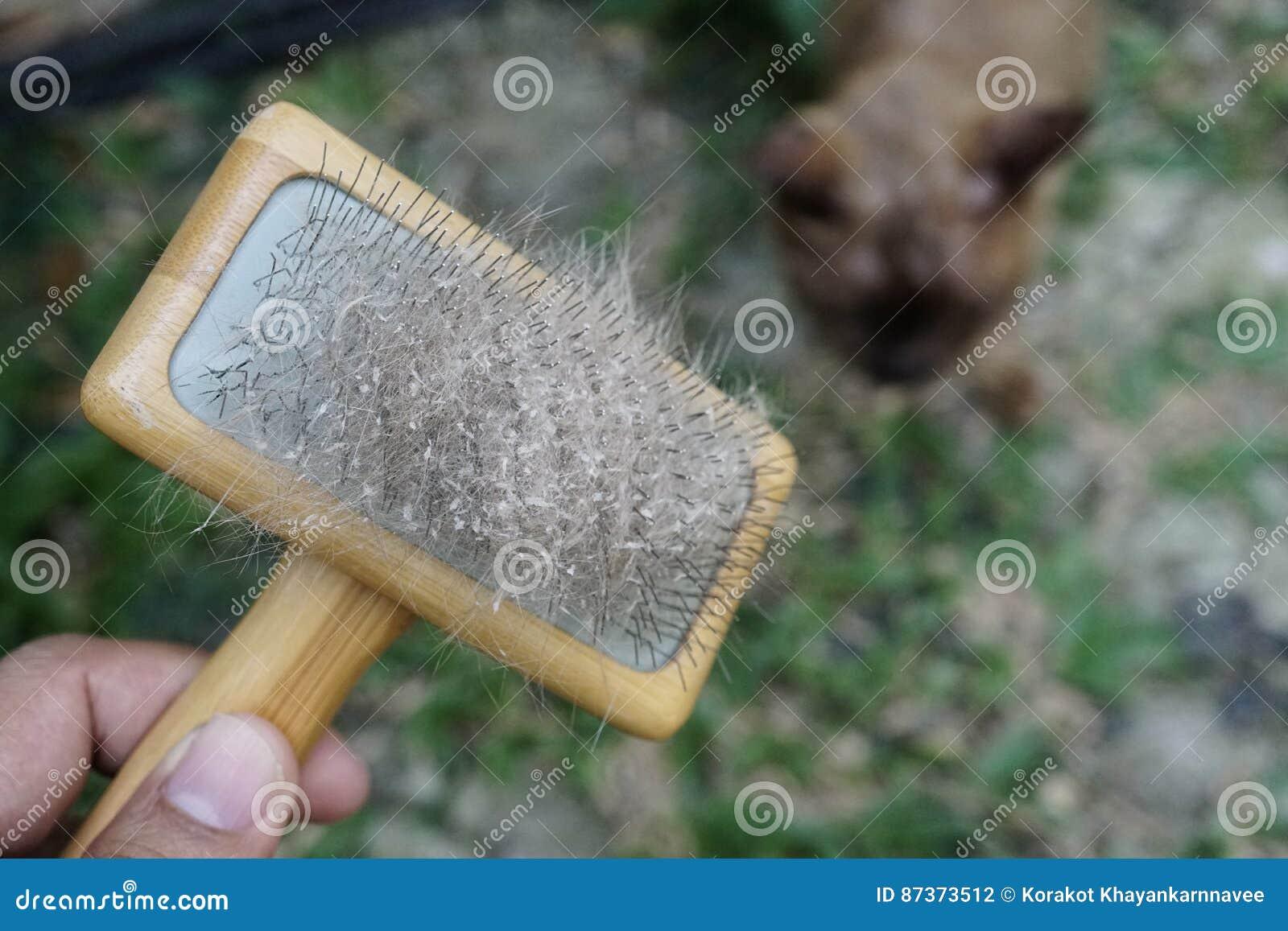 Кожа и волосы кота на щетке после холить