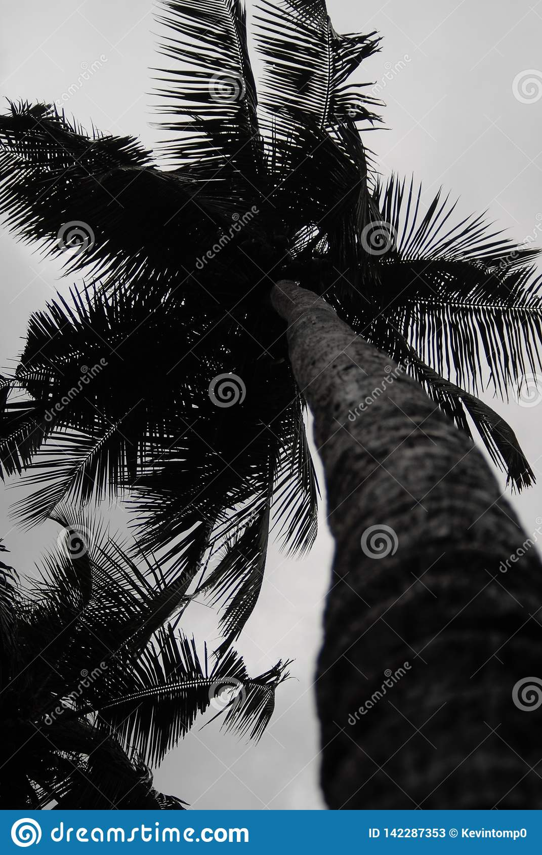 Кокосовая пальма в Керале