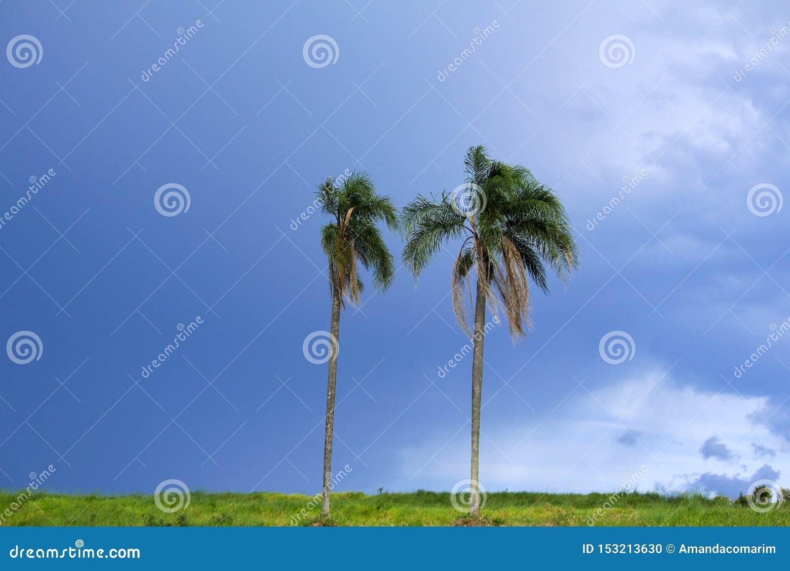 Кокосовые пальмы в облачном небе