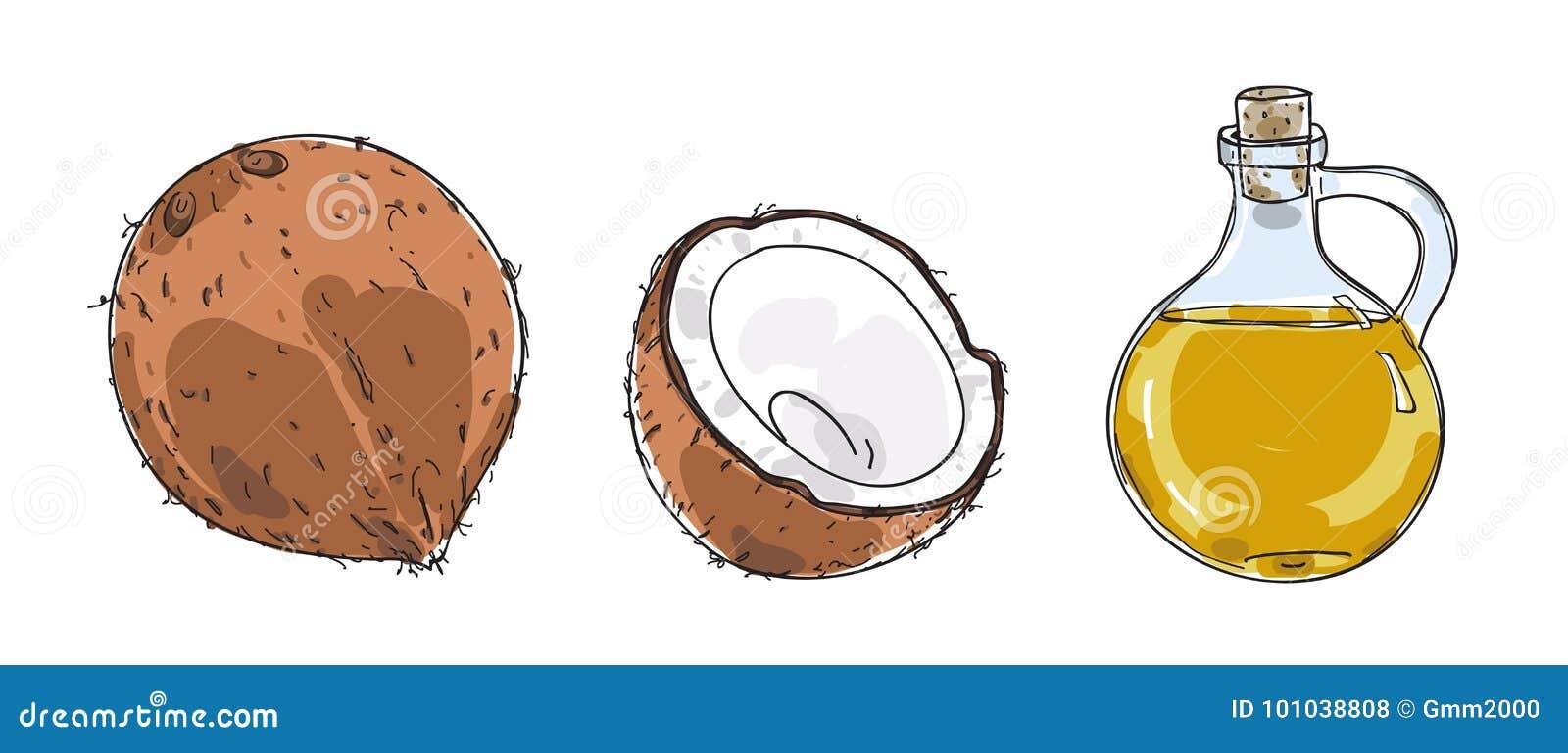 Кокос и кокосовое масло вручают вычерченную иллюстрацию искусства вектора
