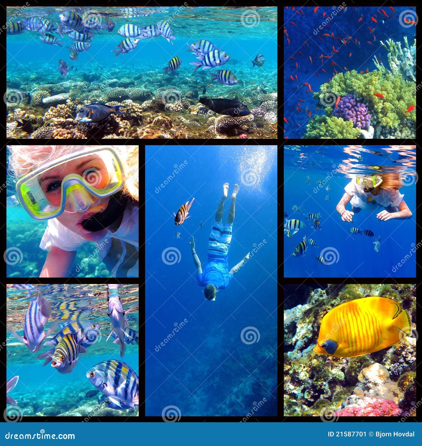 коллаж snorkeling под водой