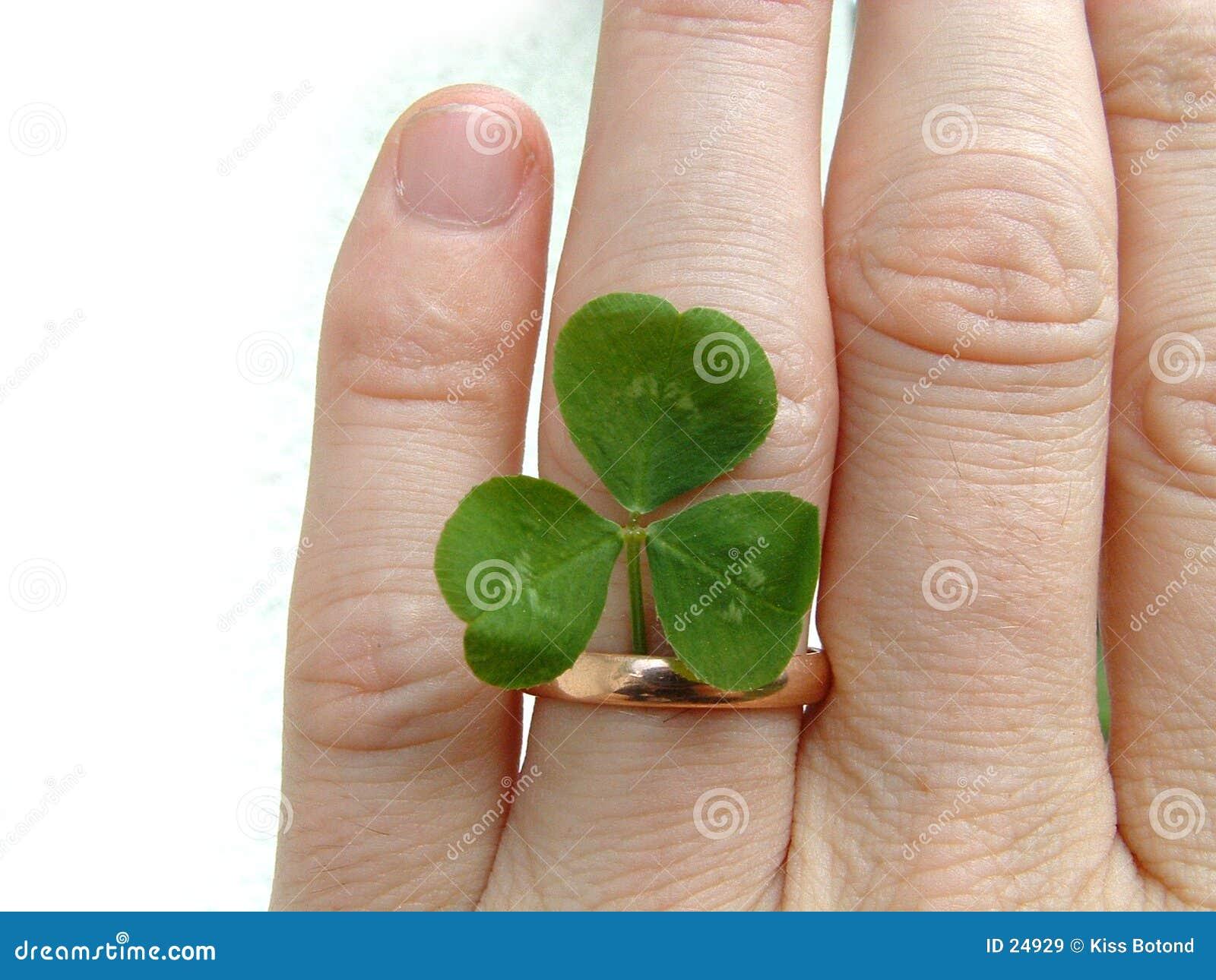 кольцо клевера