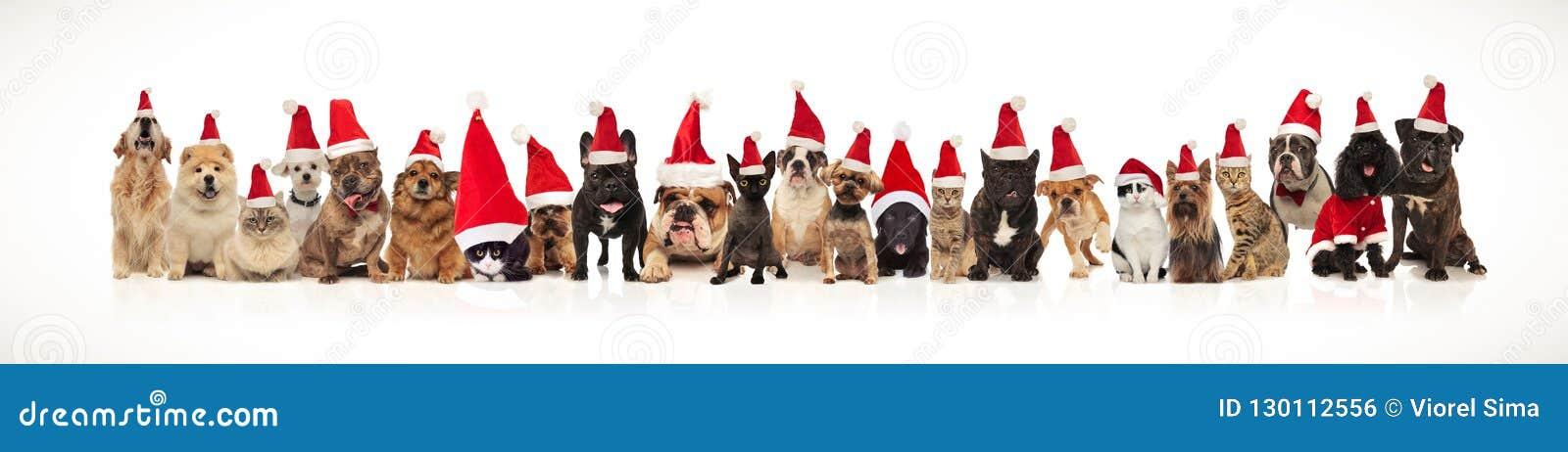 Команда много котов и собак рождества нося крышки santa