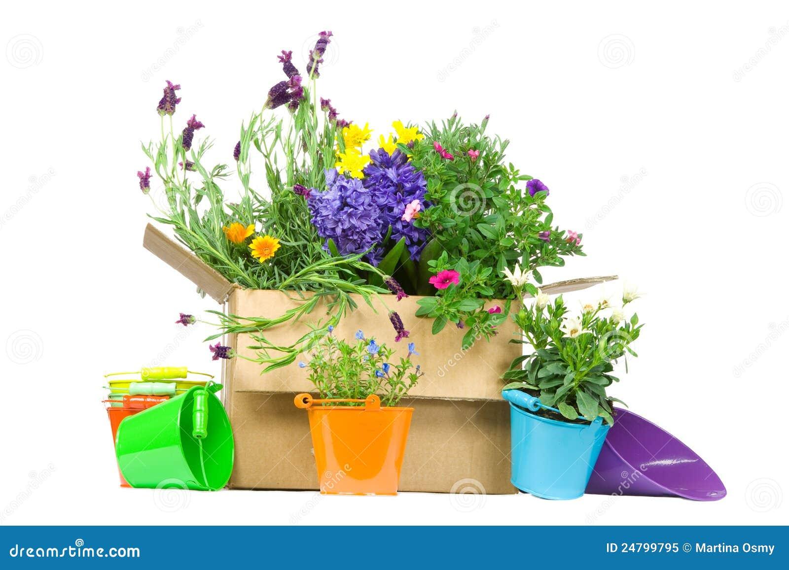 коммерция e коробки цветет свежая