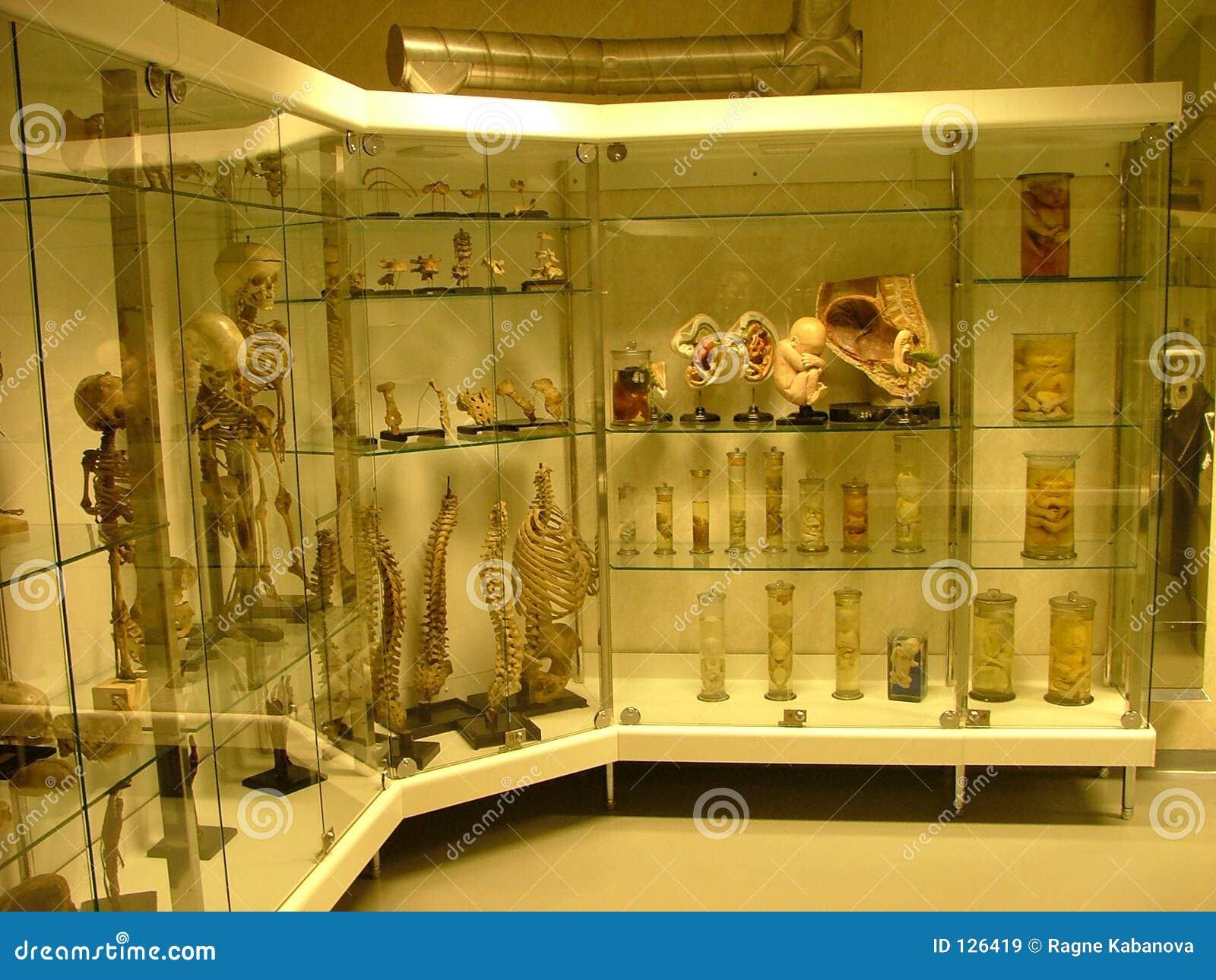 комната выставки аутопсии