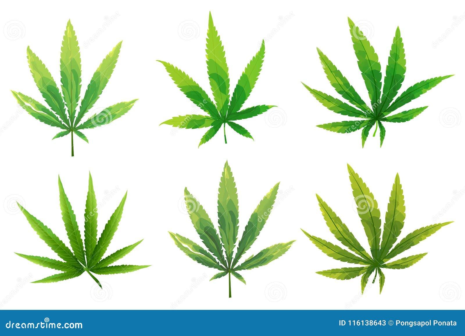 Конопля марихуана фото как найти куст марихуаны