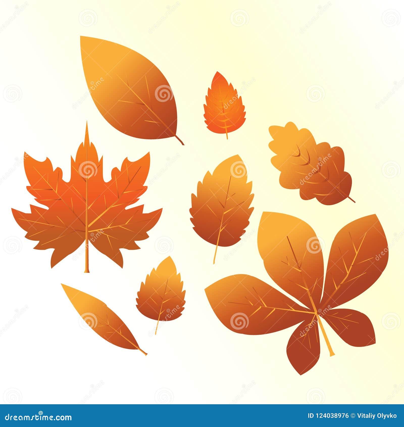 Комплект оранжевых листьев