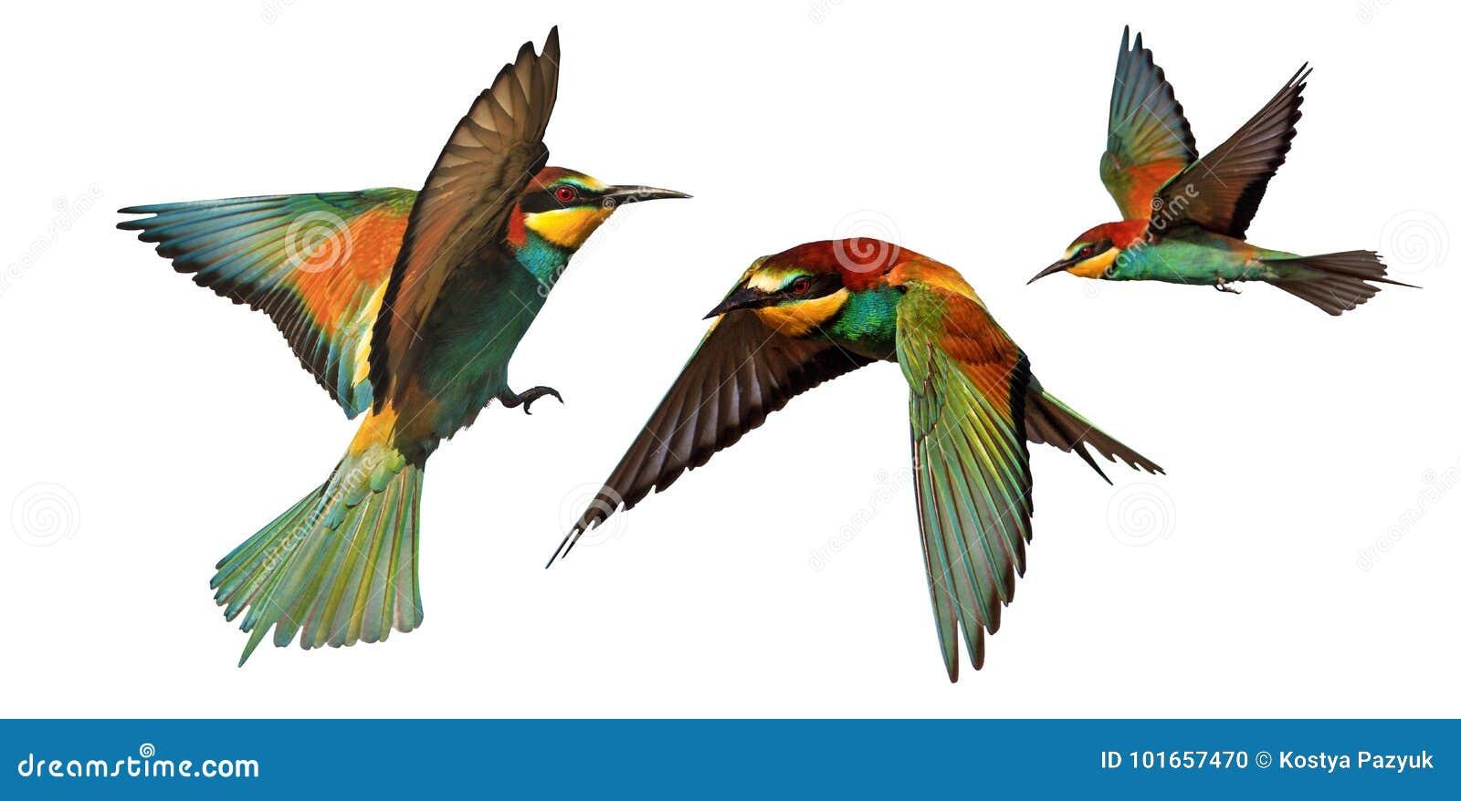 Комплект птиц цвета в полете изолированных на белой предпосылке