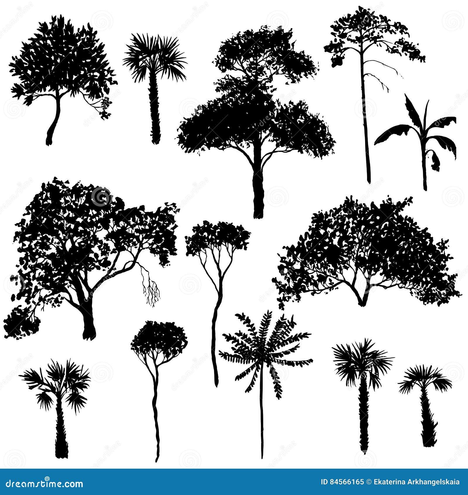 Комплект вектора лиственных деревьев