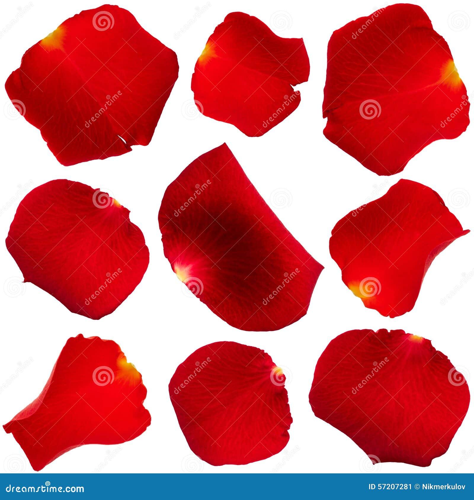 Комплект лепестков розы