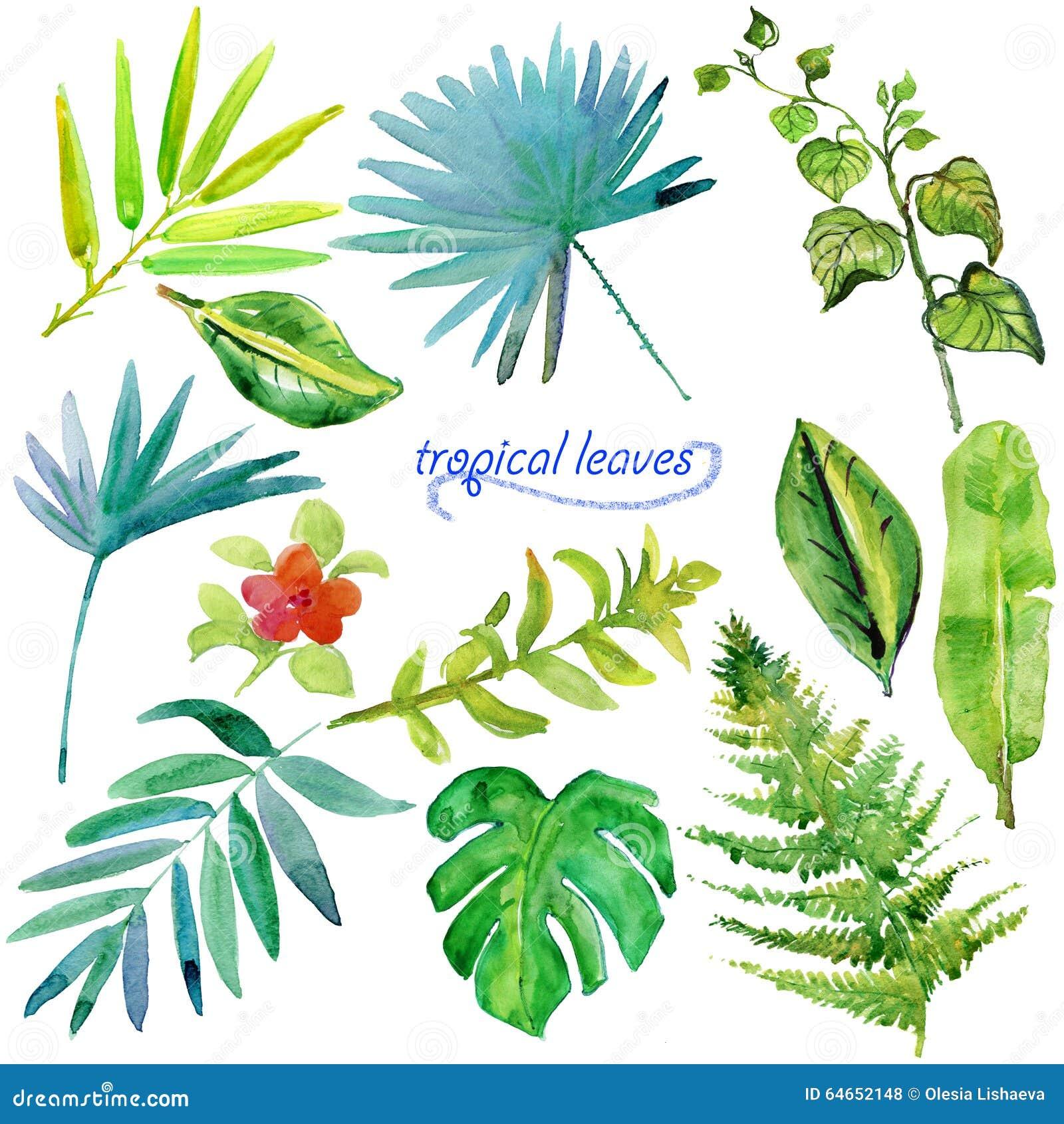 Комплект зеленых тропических листьев и заводов акварели
