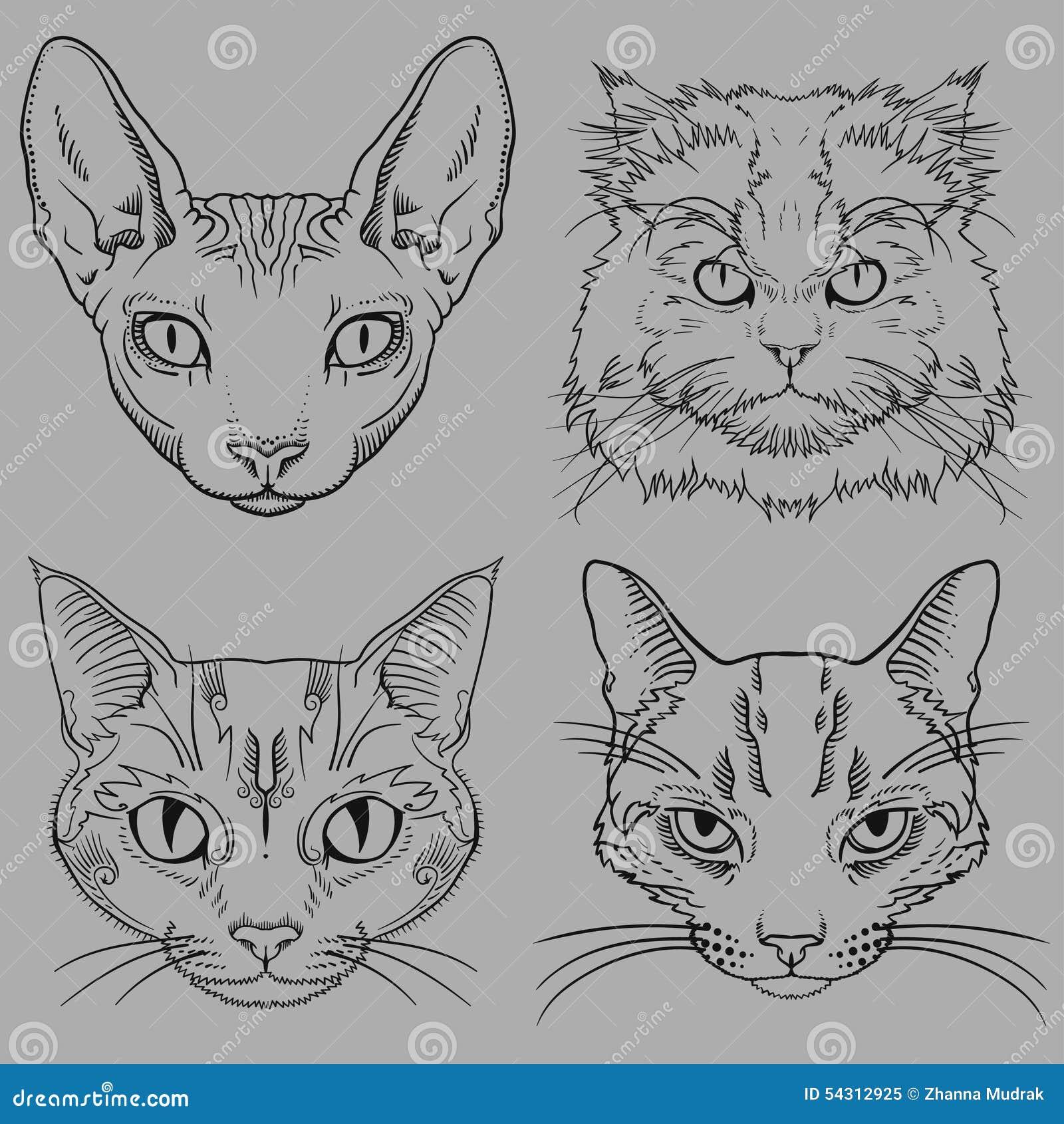 Комплект нарисованных рукой одичалых портретов кота