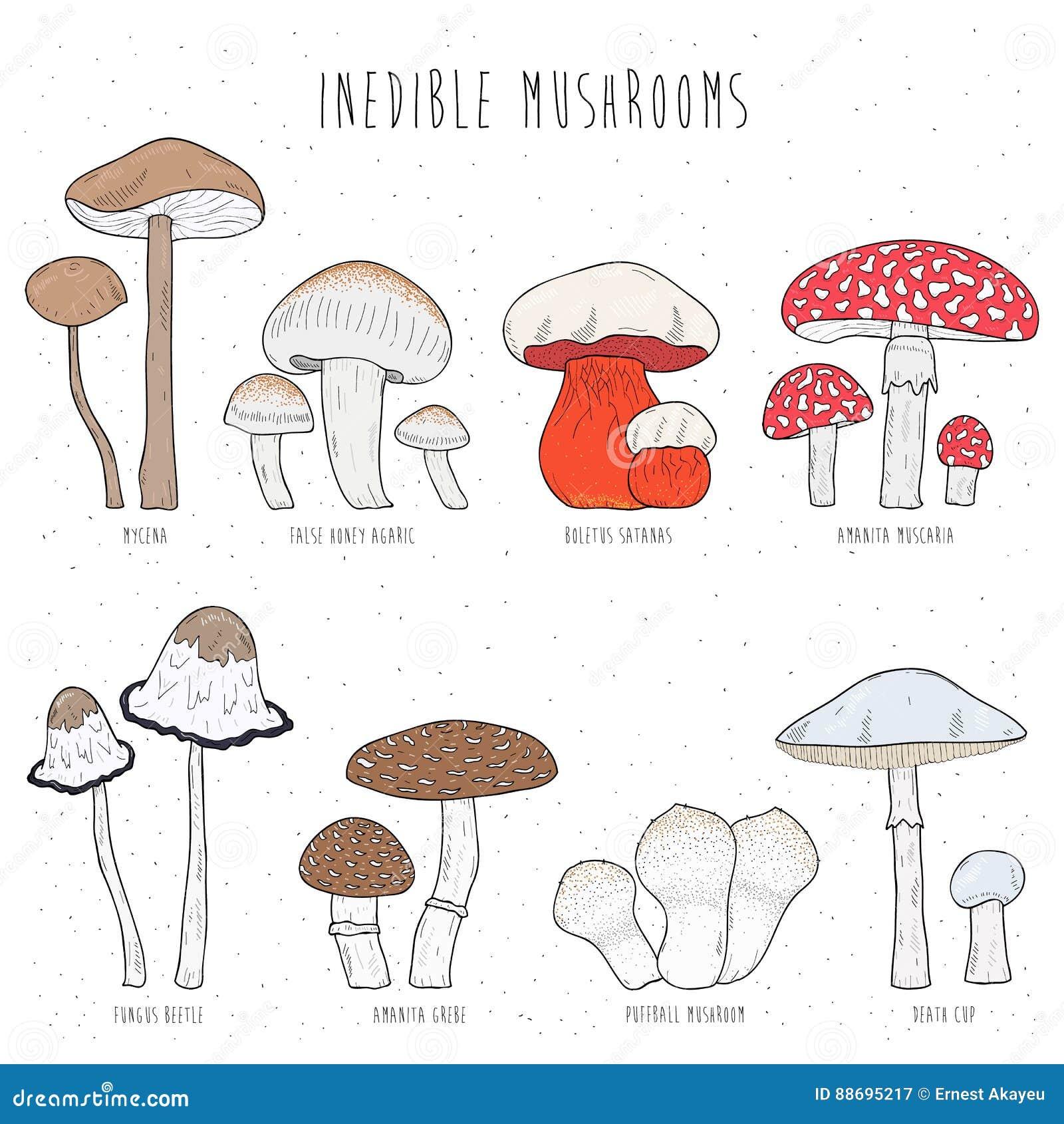 фото грибов с названиями скачать