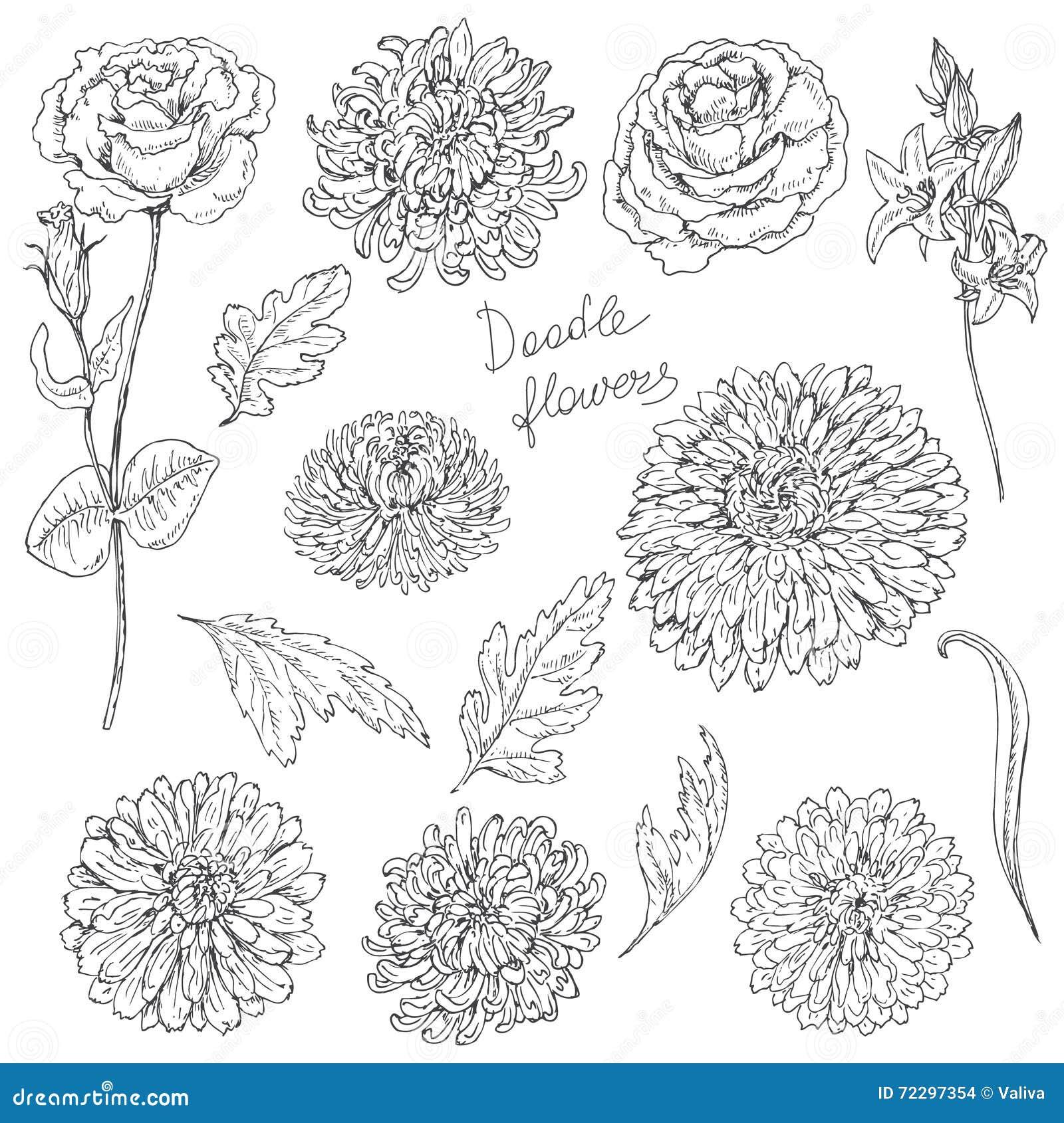 Download Комплект эскиза цветков и листьев Иллюстрация вектора - иллюстрации насчитывающей украшение, хризантема: 72297354