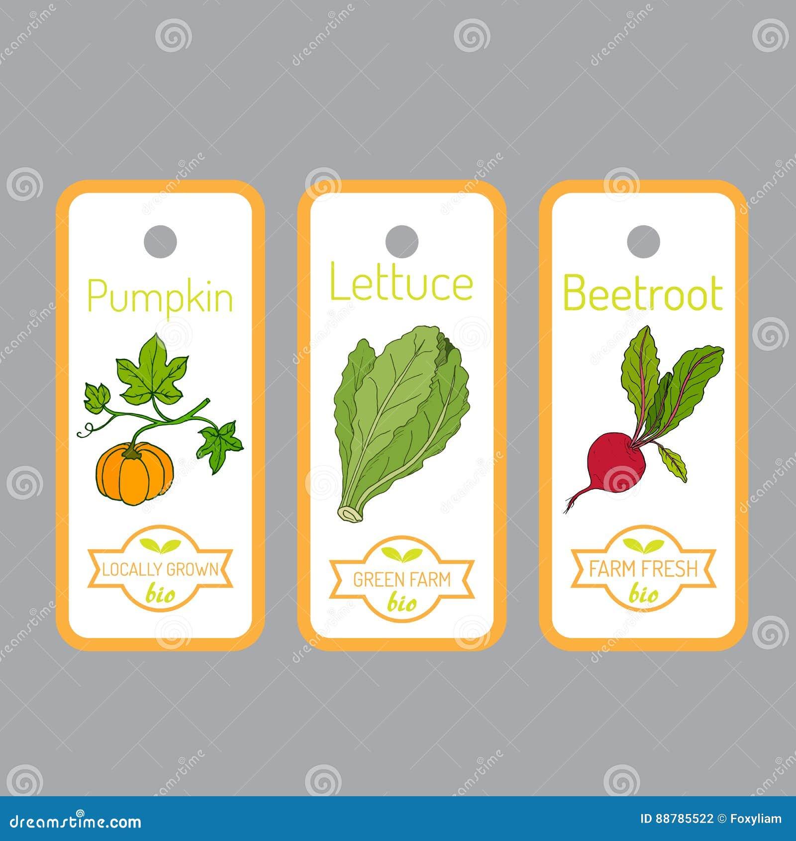 Комплект ярлыков вектора с овощами нарисованными рукой