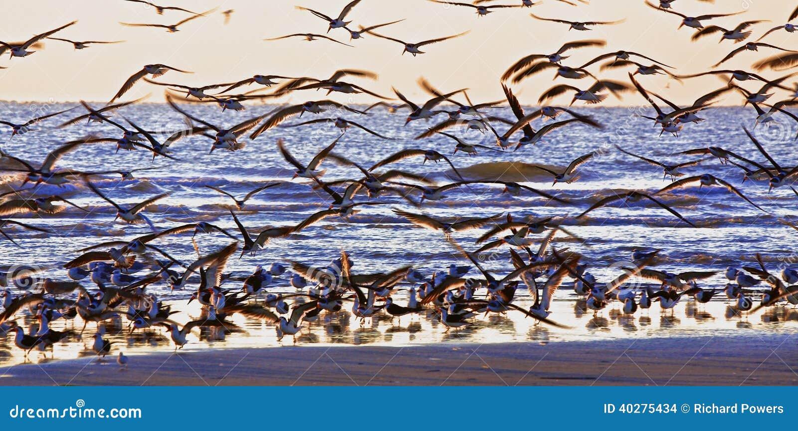 Конгрегация морских птиц