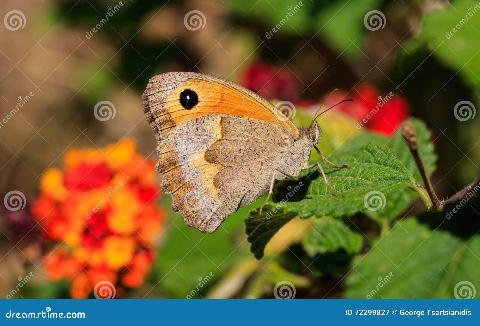 Download Конец-вверх бабочки на зеленых лист Стоковое Изображение - изображение насчитывающей бабочка, green: 72299827