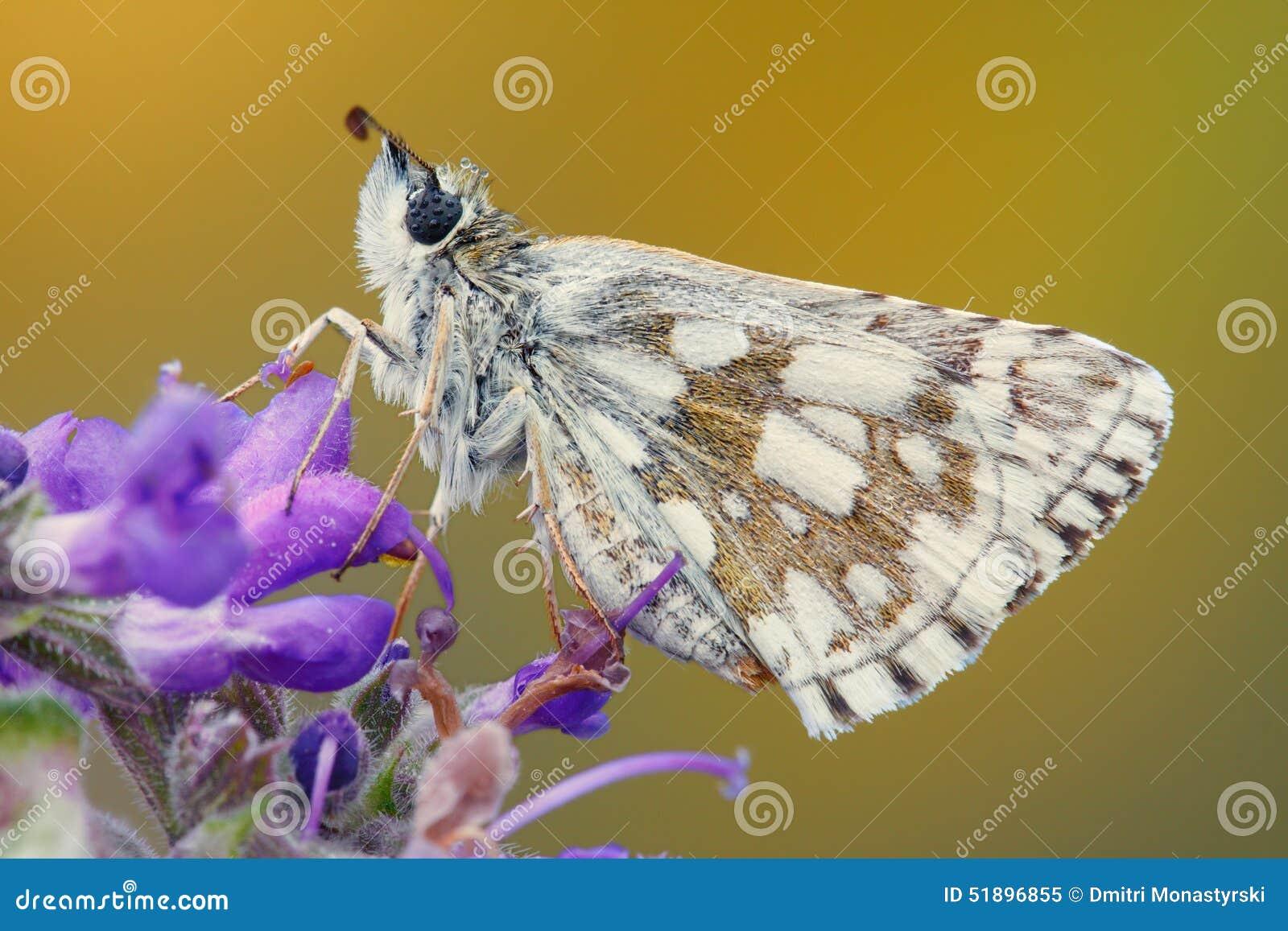 Конец-вверх бабочки на цветке