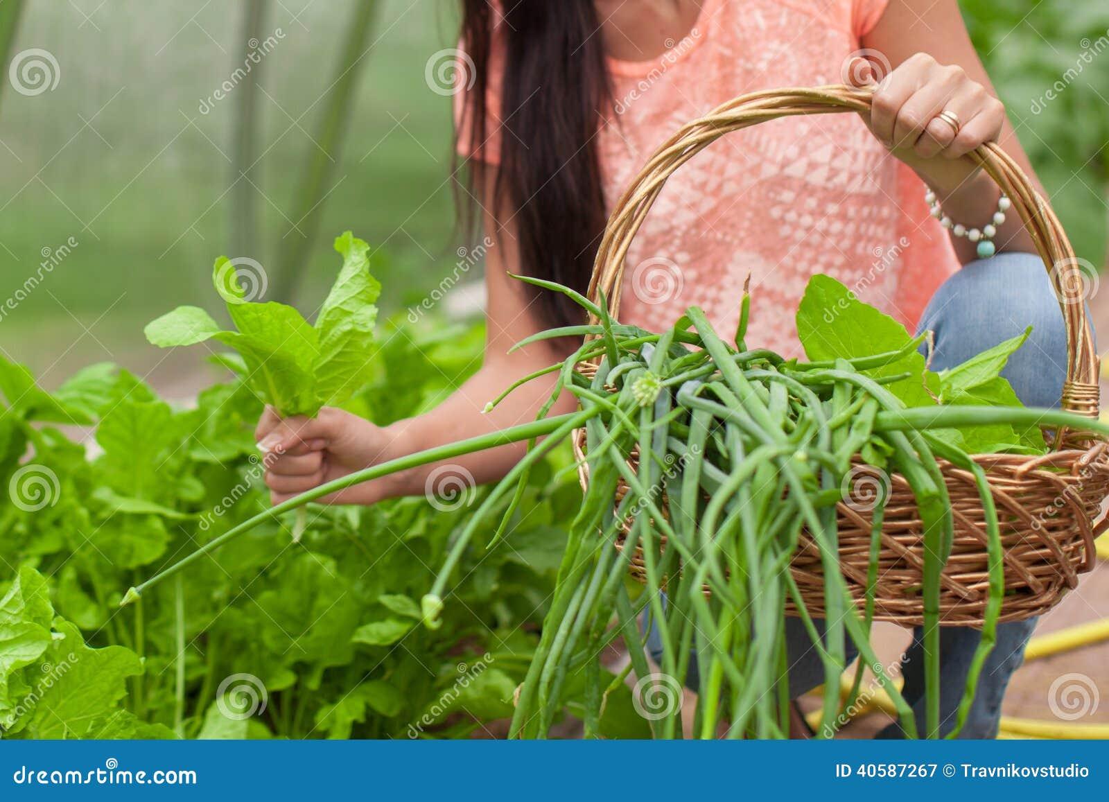 Конец-вверх корзины зеленеет в руках женщины