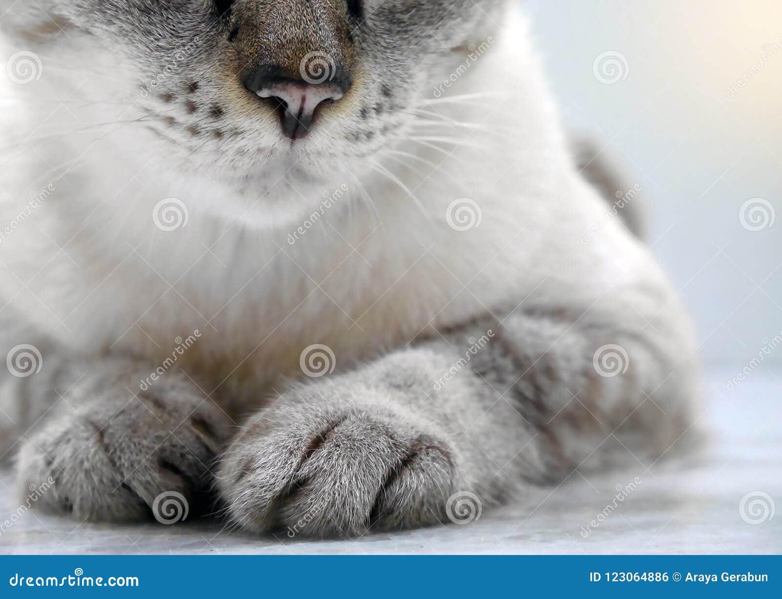 Конец-вверх кота лежа на поле с только частично частями видимыми