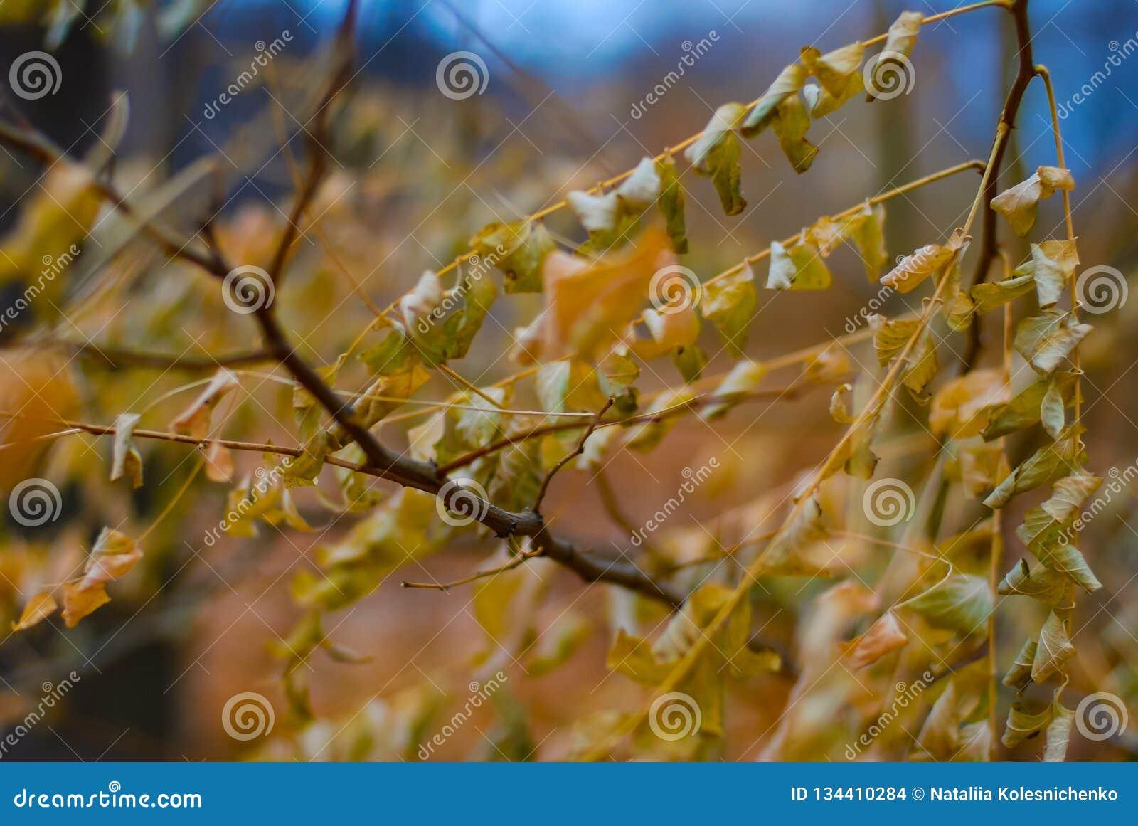 Конец-вверх листвы осени золотой с мягкой запачканной предпосылкой