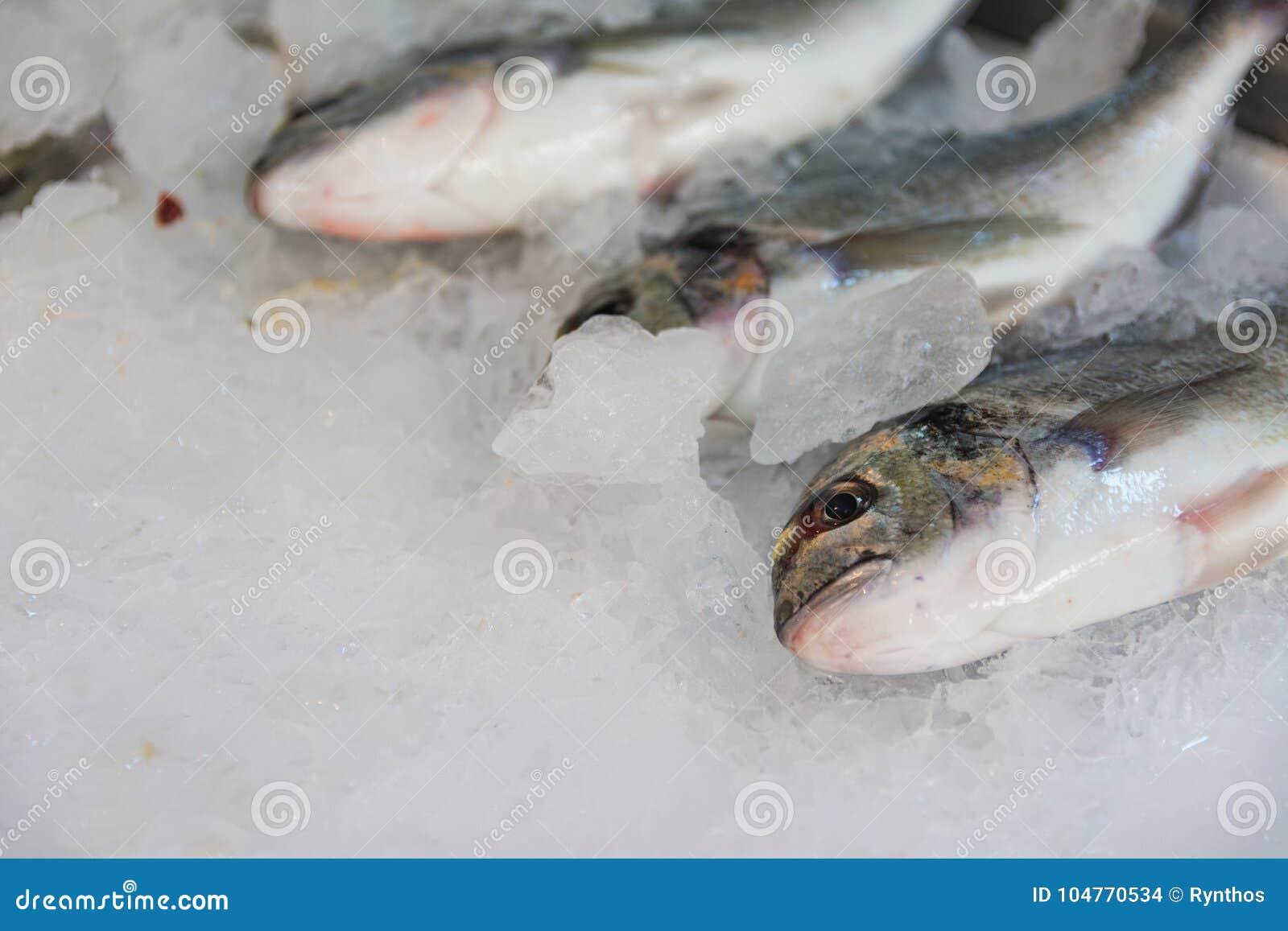 Конец-Вверх свеже уловленного леща моря Позолот-головы или Sparus Aurata на льде выровнянном вверх по для продажи внутри греческо