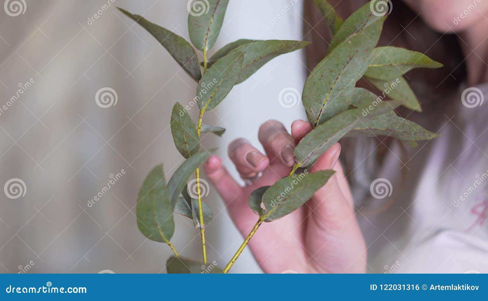 Конец-вверх: флорист девушки держа ветвь евкалипта