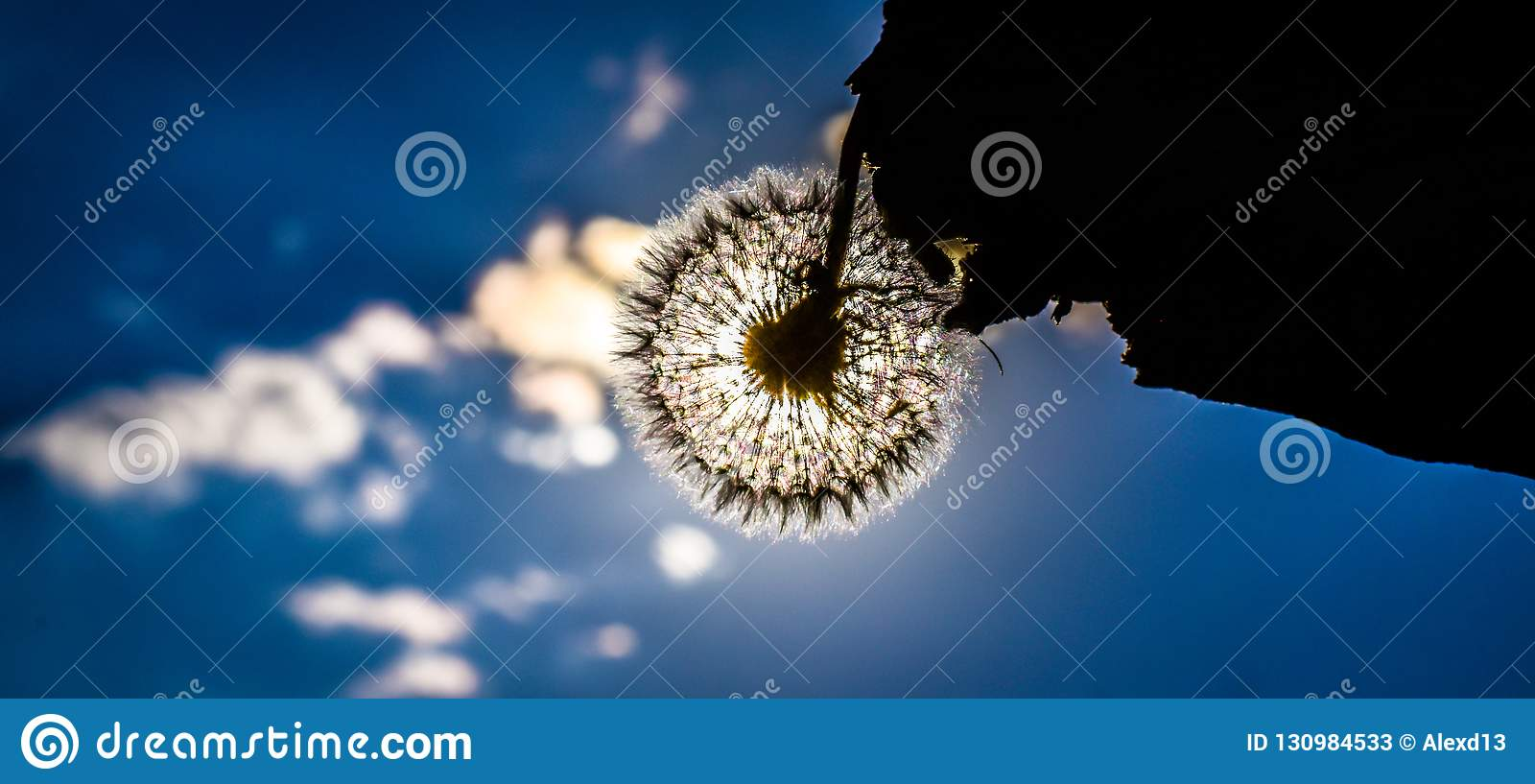 Конец лета, цветок против неба