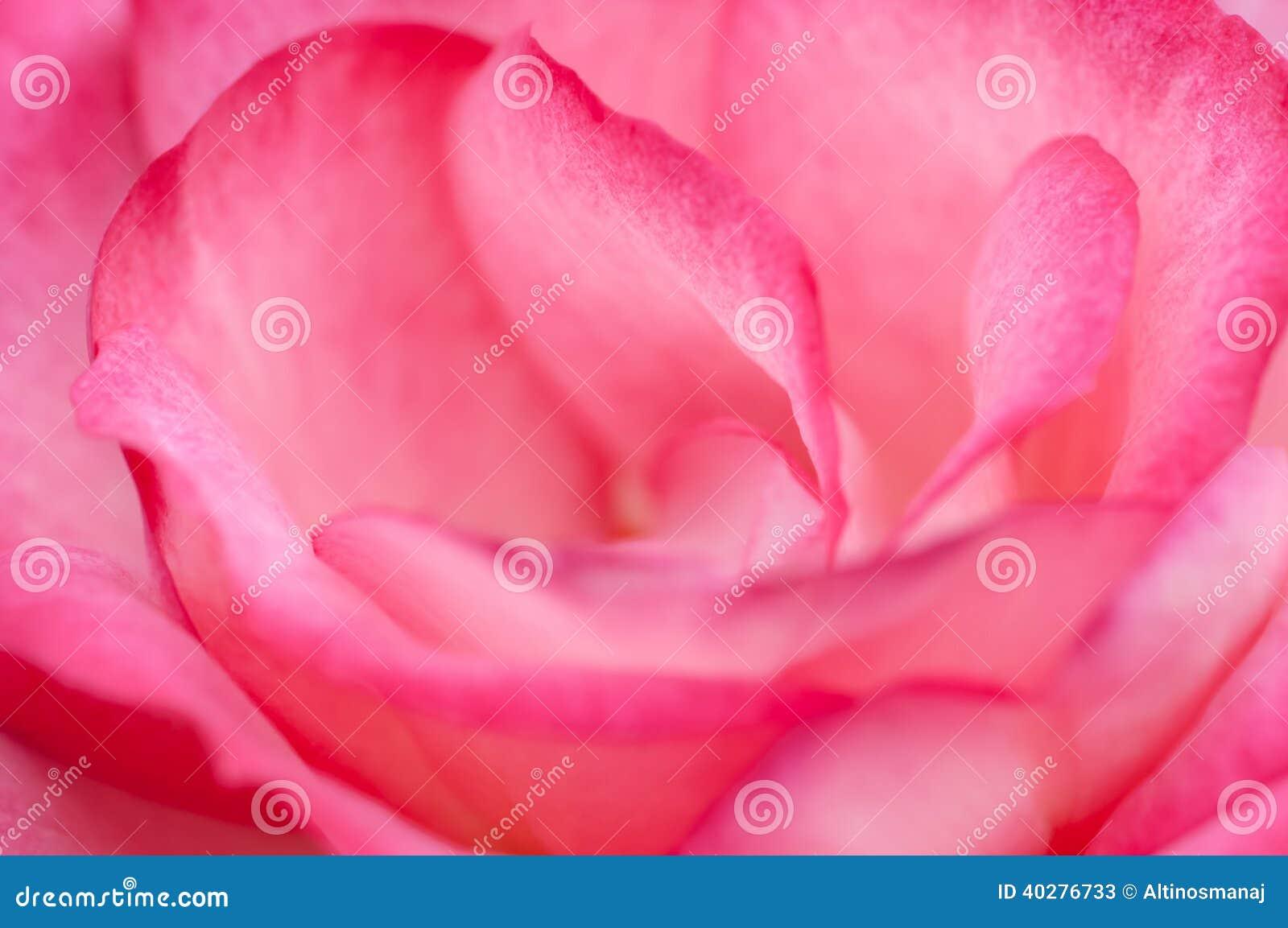 Конец макроса розы пинка вверх