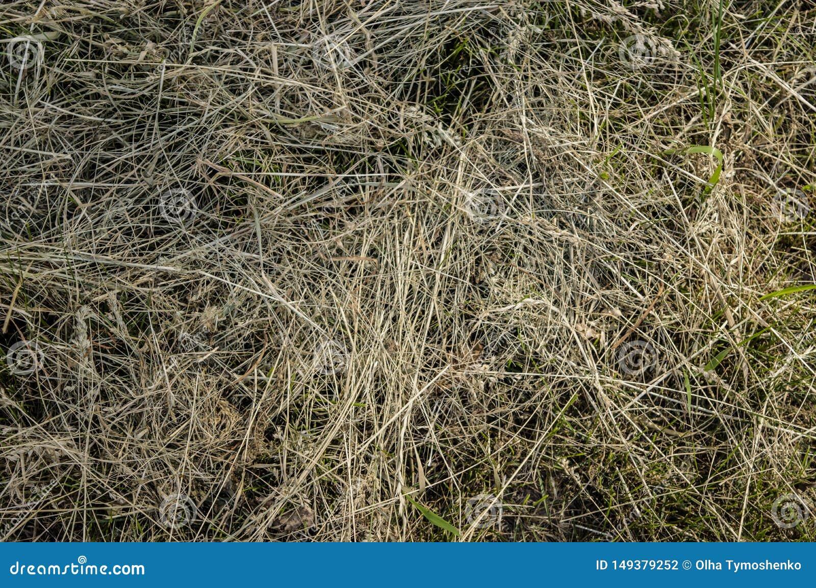 Конец природы сена сухой травы органический вверх