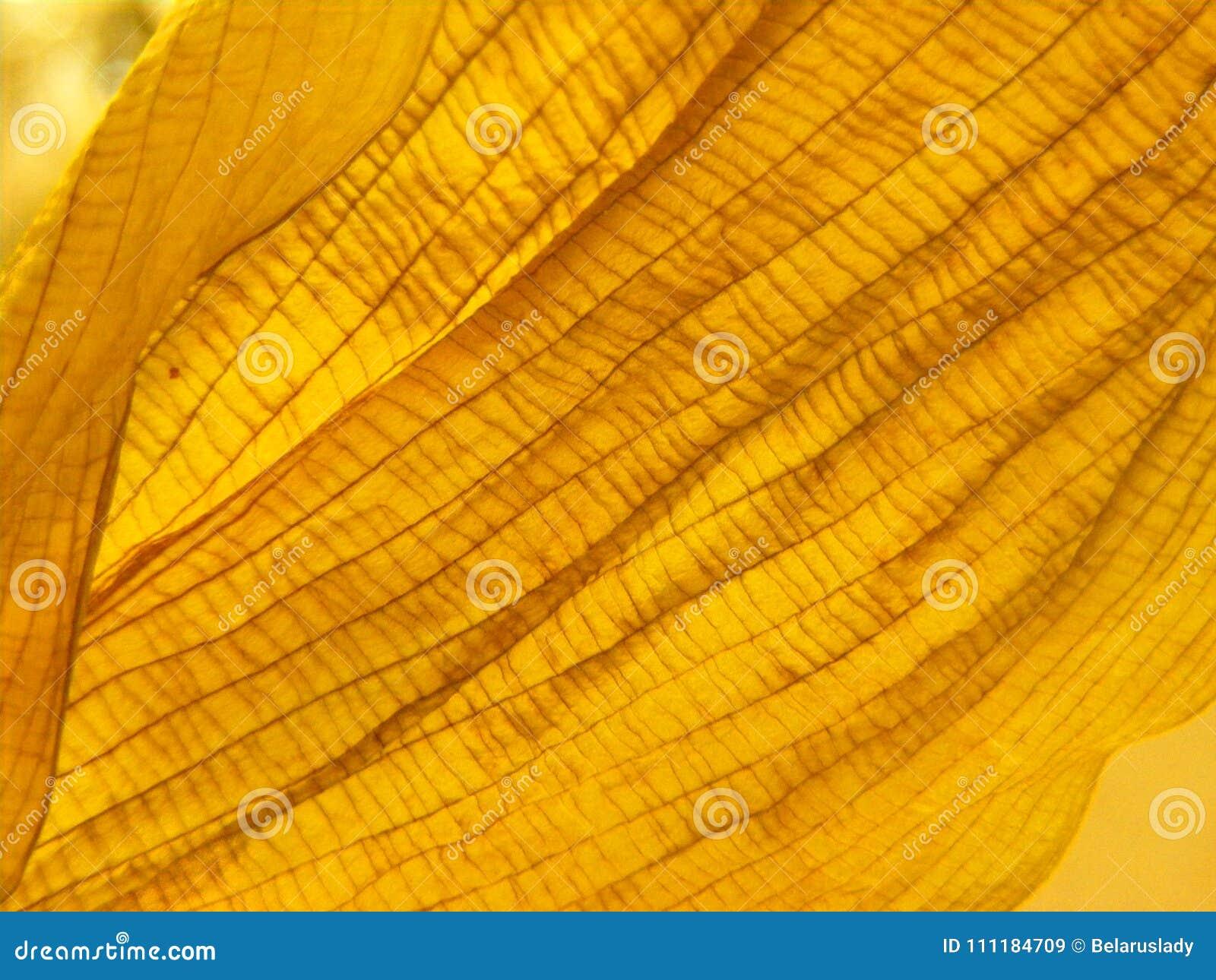 Конец текстуры лист осени оранжевый сухой вверх