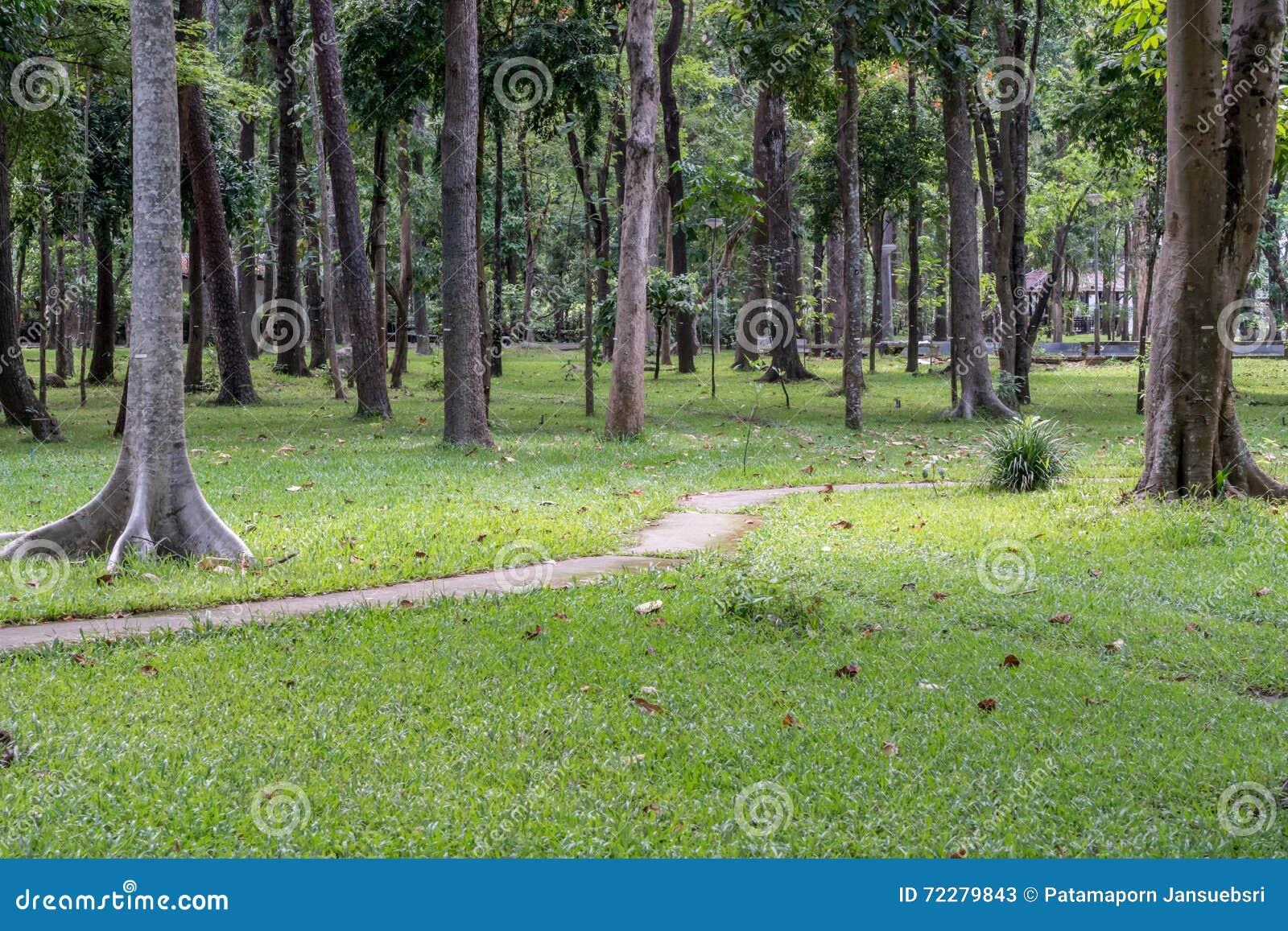 Download Конкретная тропа в саде стоковое изображение. изображение насчитывающей стенд - 72279843