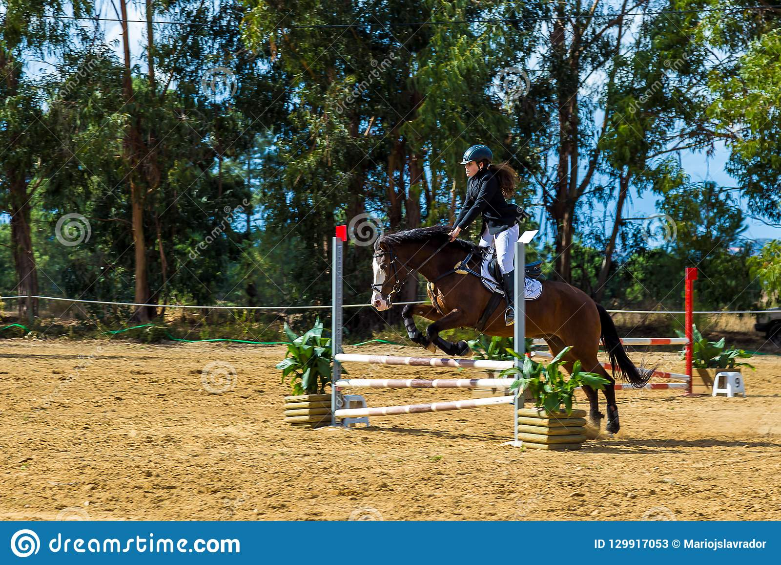 Конный спорт в португальском запасе лошади природы