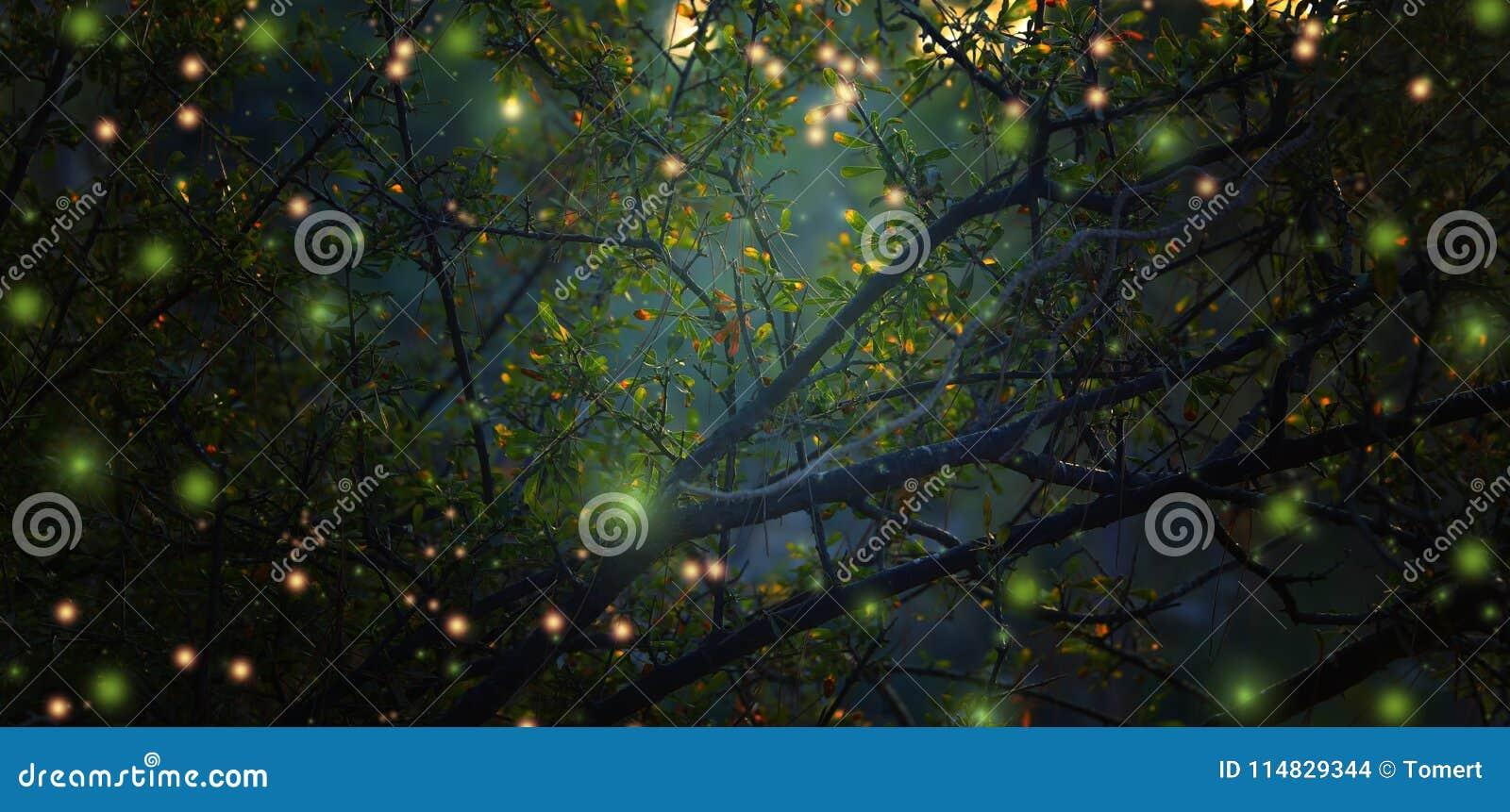 Конспект и волшебное изображение летания светляка в лесе ночи