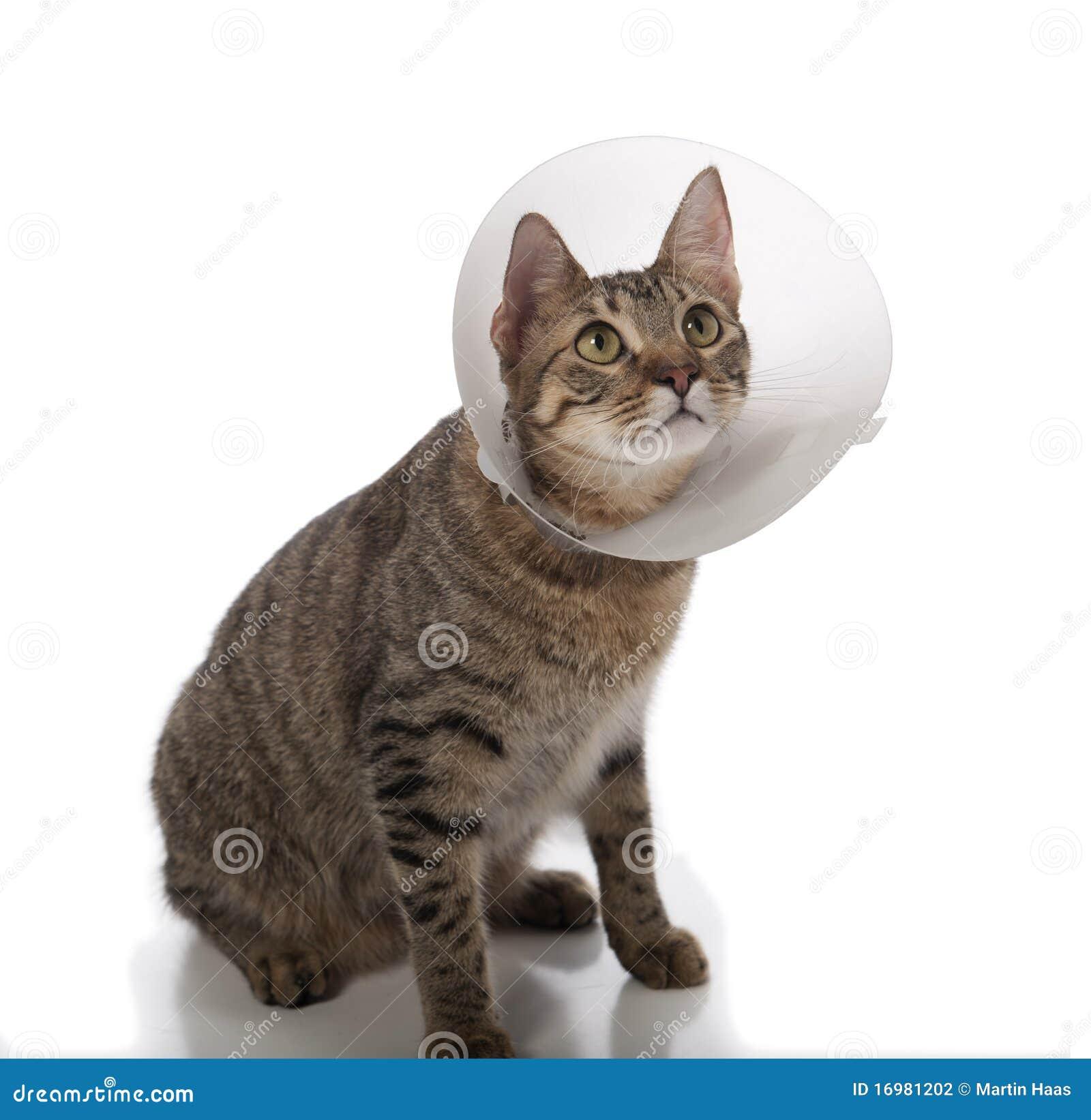 Защитный воротник для котенка своими руками