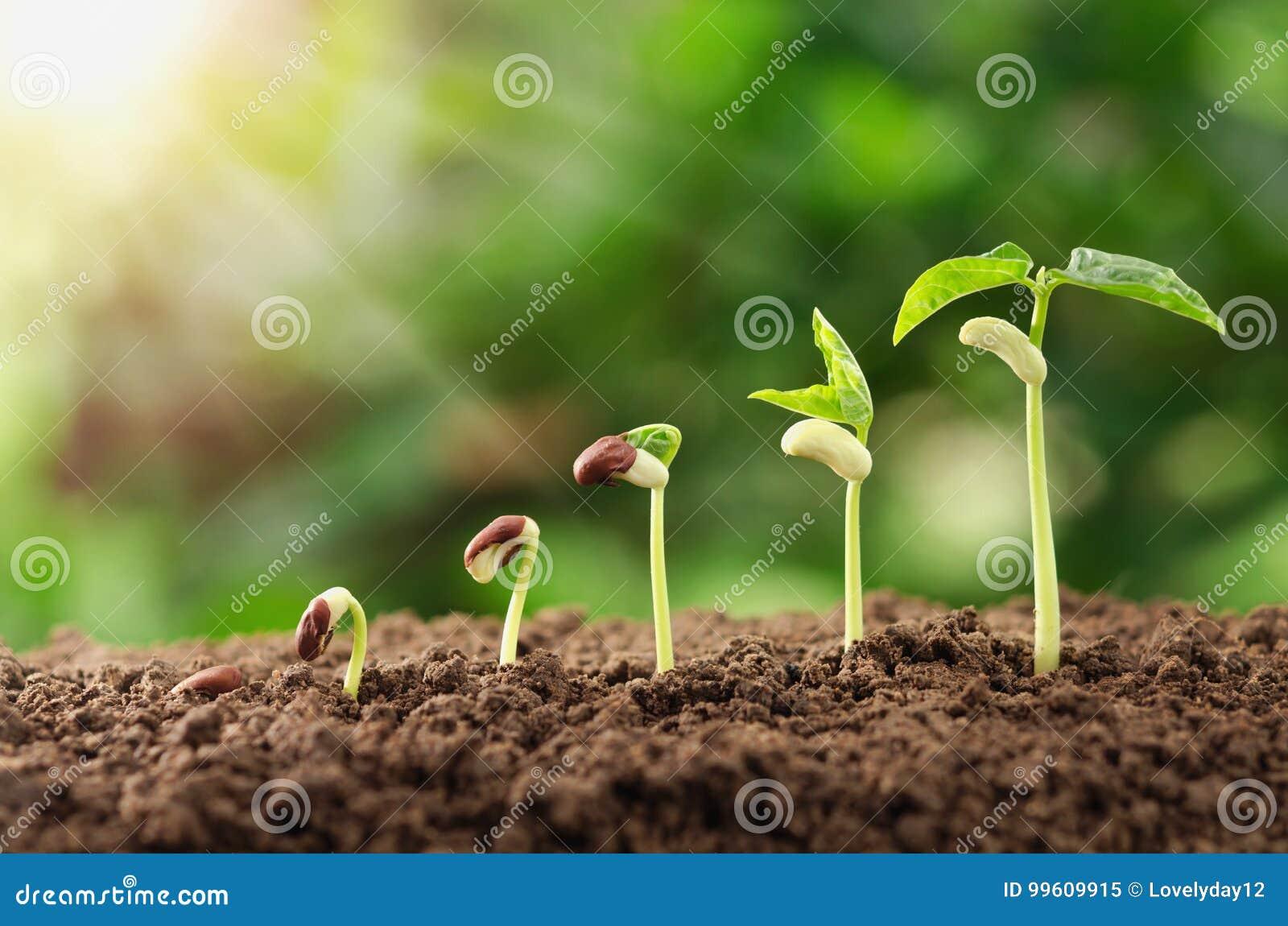 концепция шага завода земледелия осеменяя растущая в саде и su