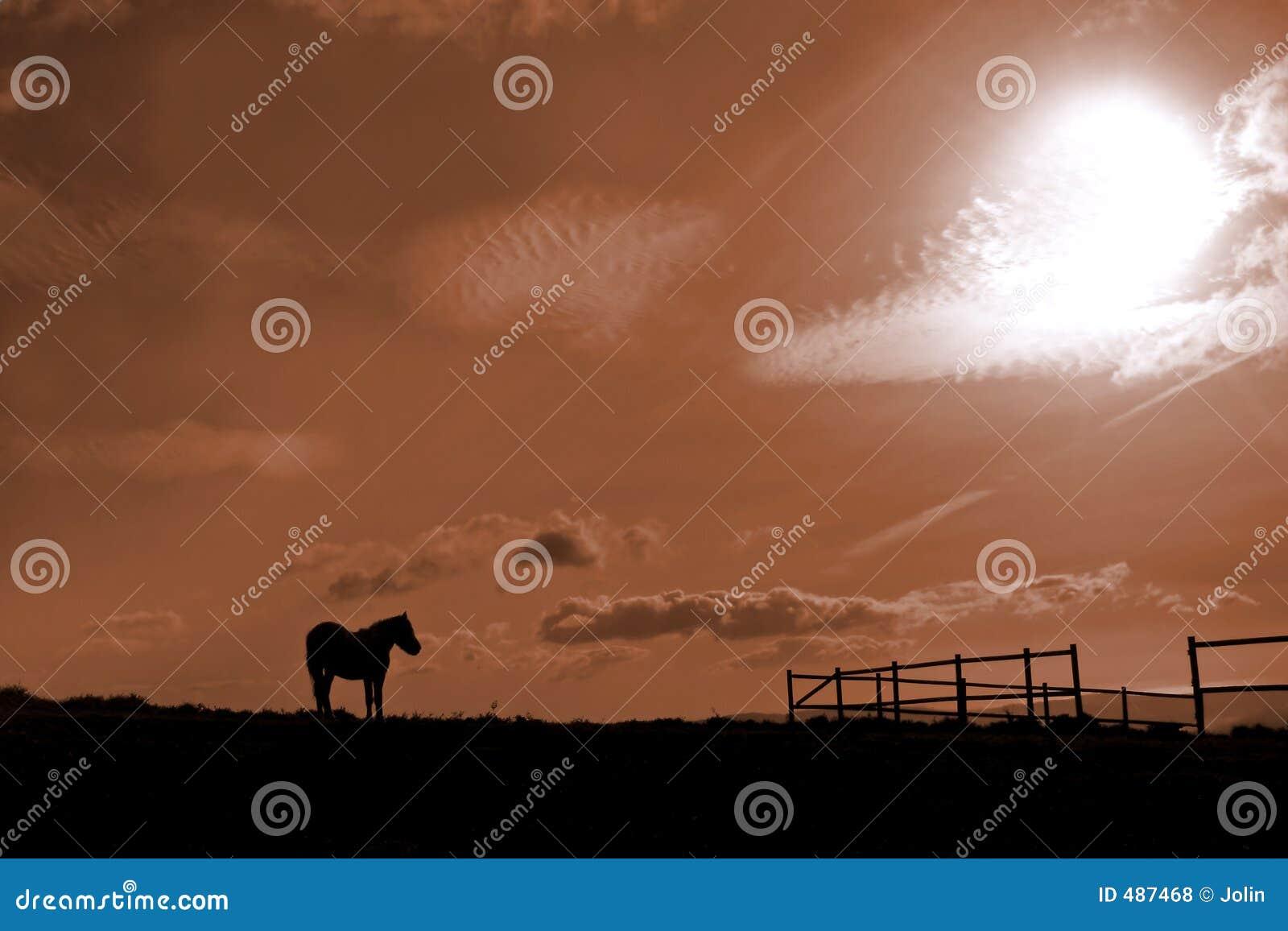 конюшня лошади
