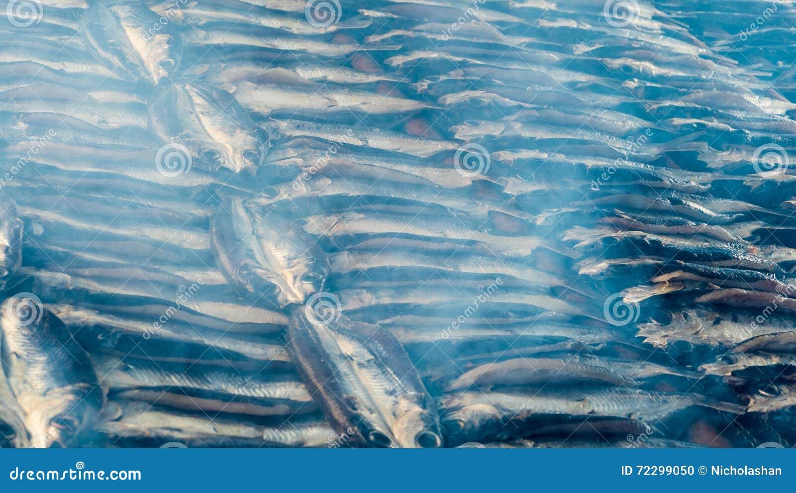 Download Копченые рыбы на плите в лете, Тайване Стоковое Фото - изображение насчитывающей завтраки, просто: 72299050