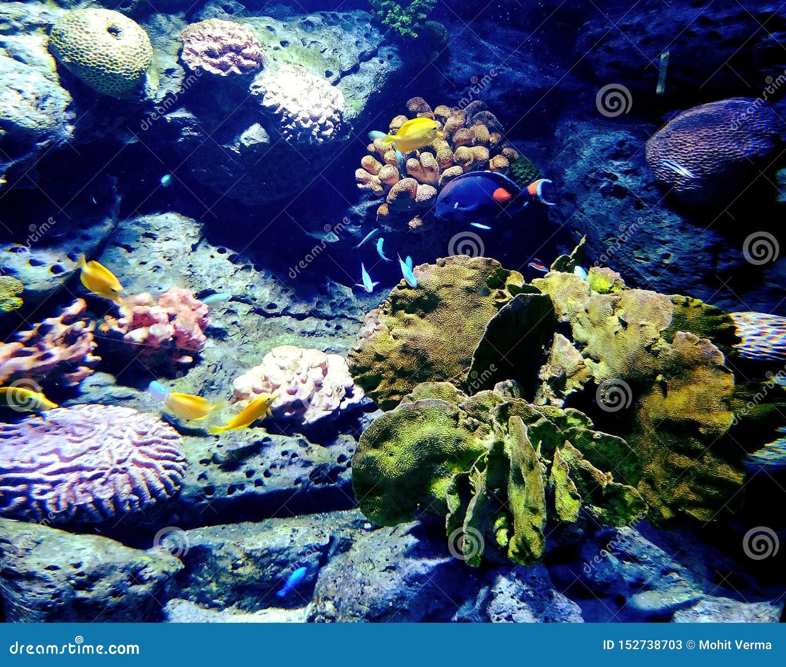 Коралловый риф внутри океана сокровище