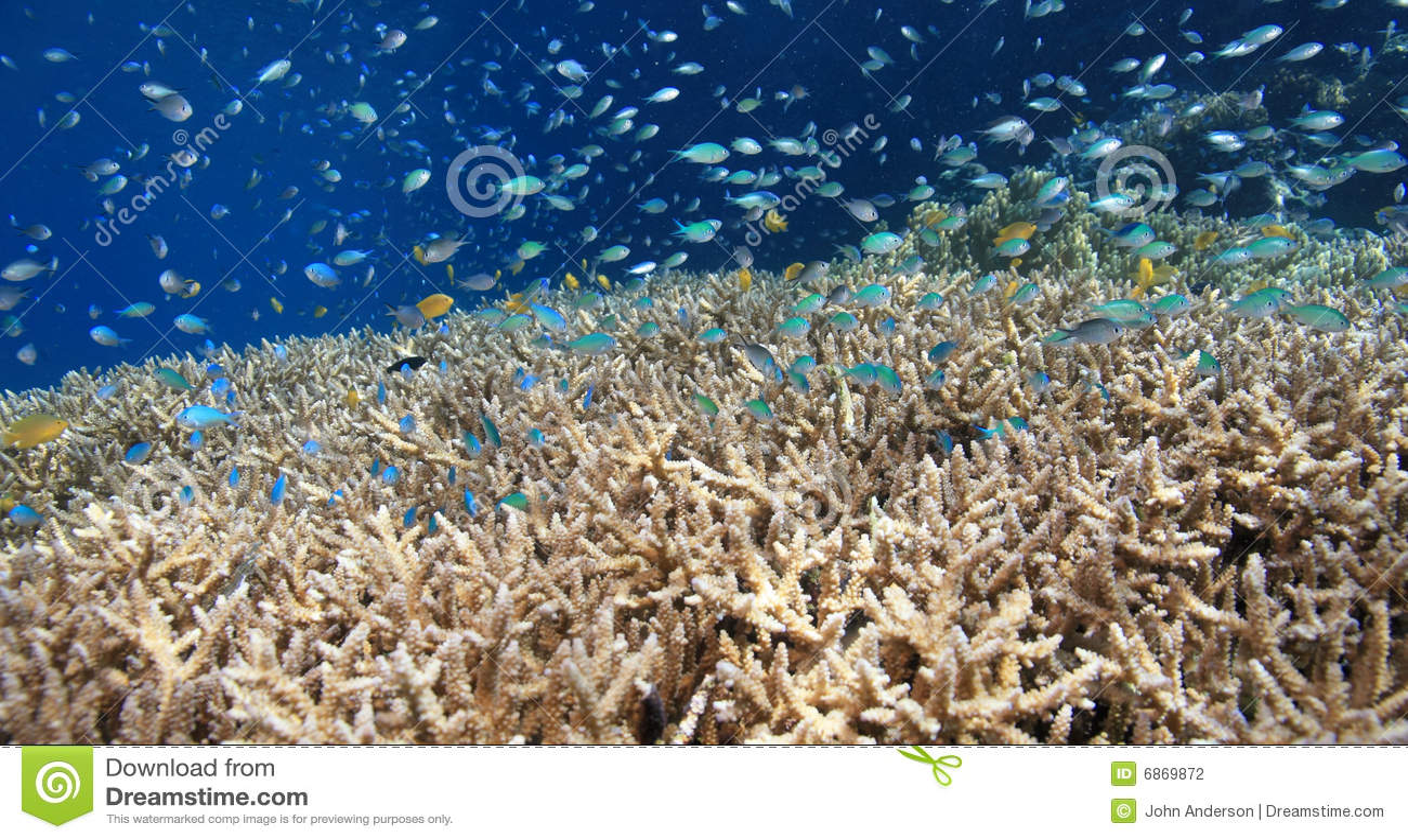 коралловый риф отмелый