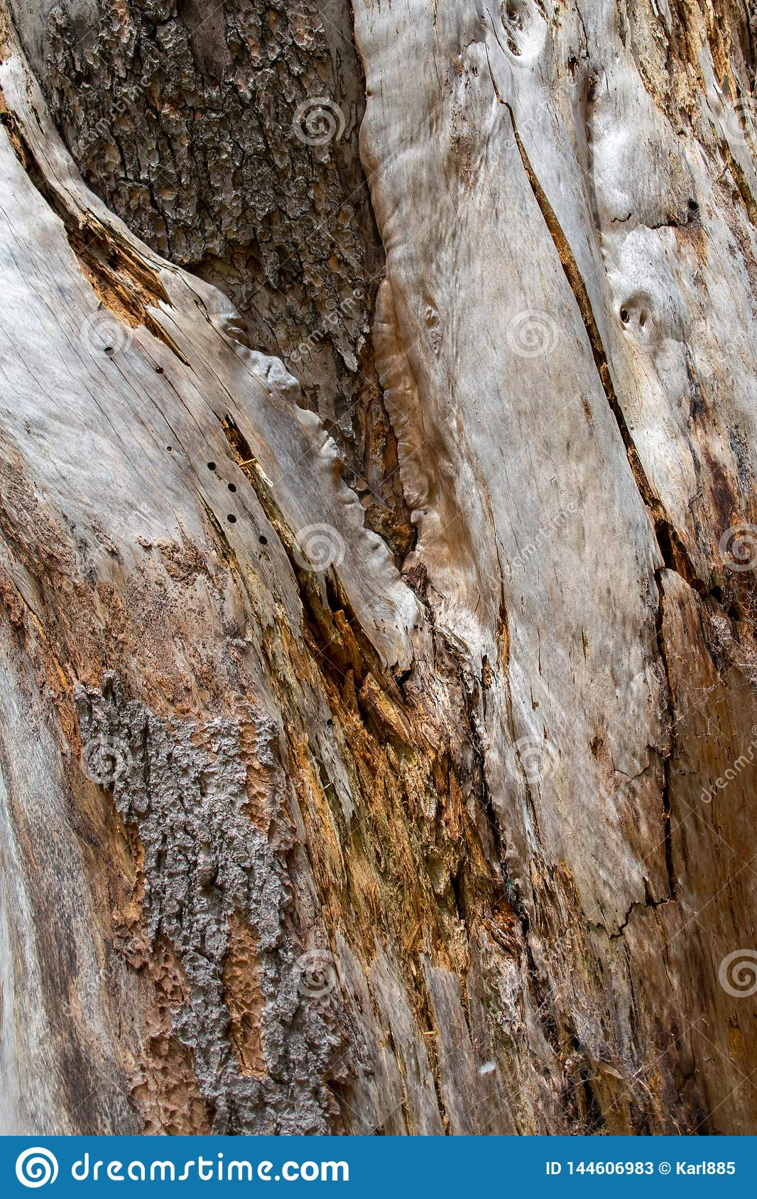 Кора дерева закрывает вверх, текстурирует и формирует