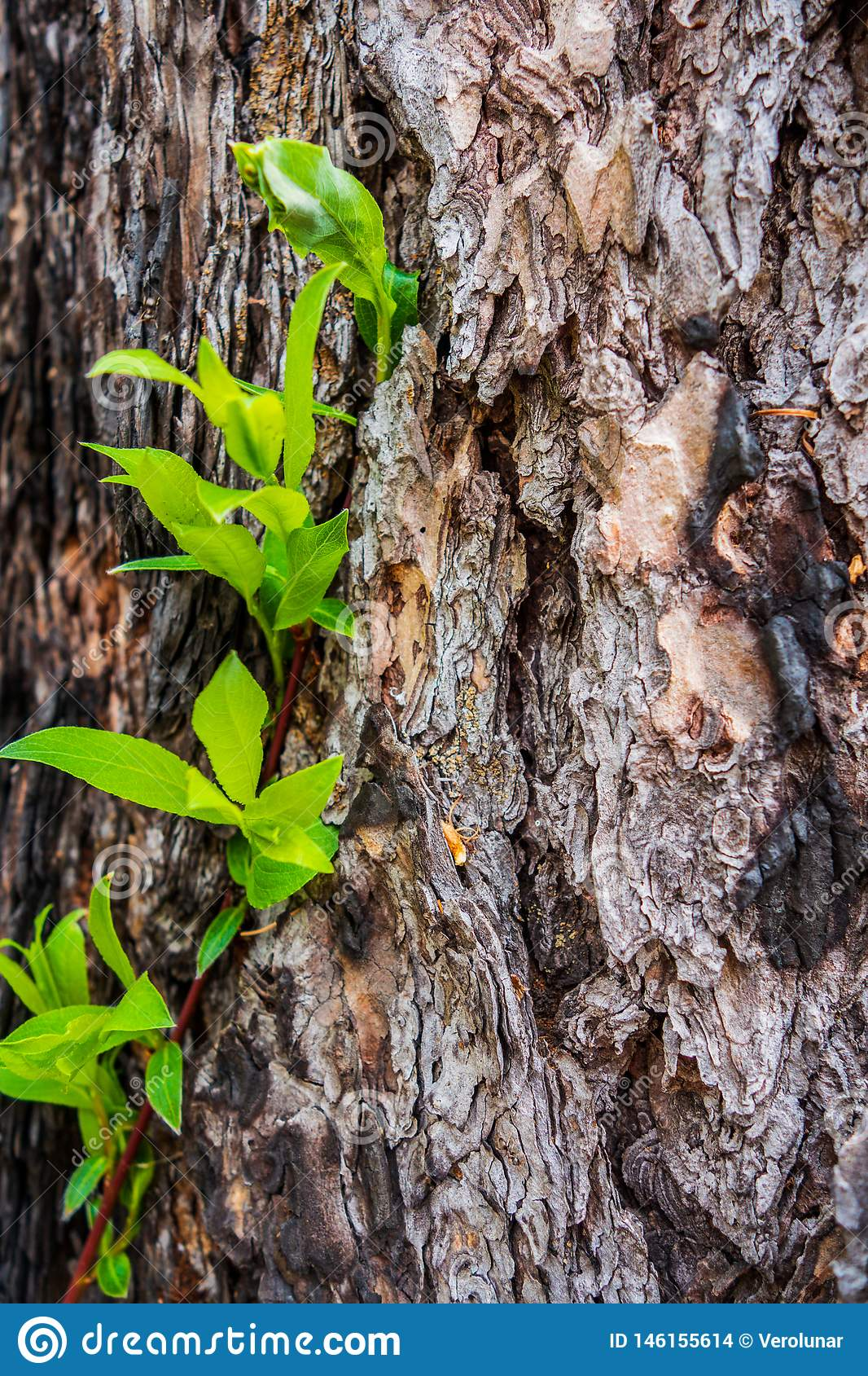 Кора дерева с зелеными листьями