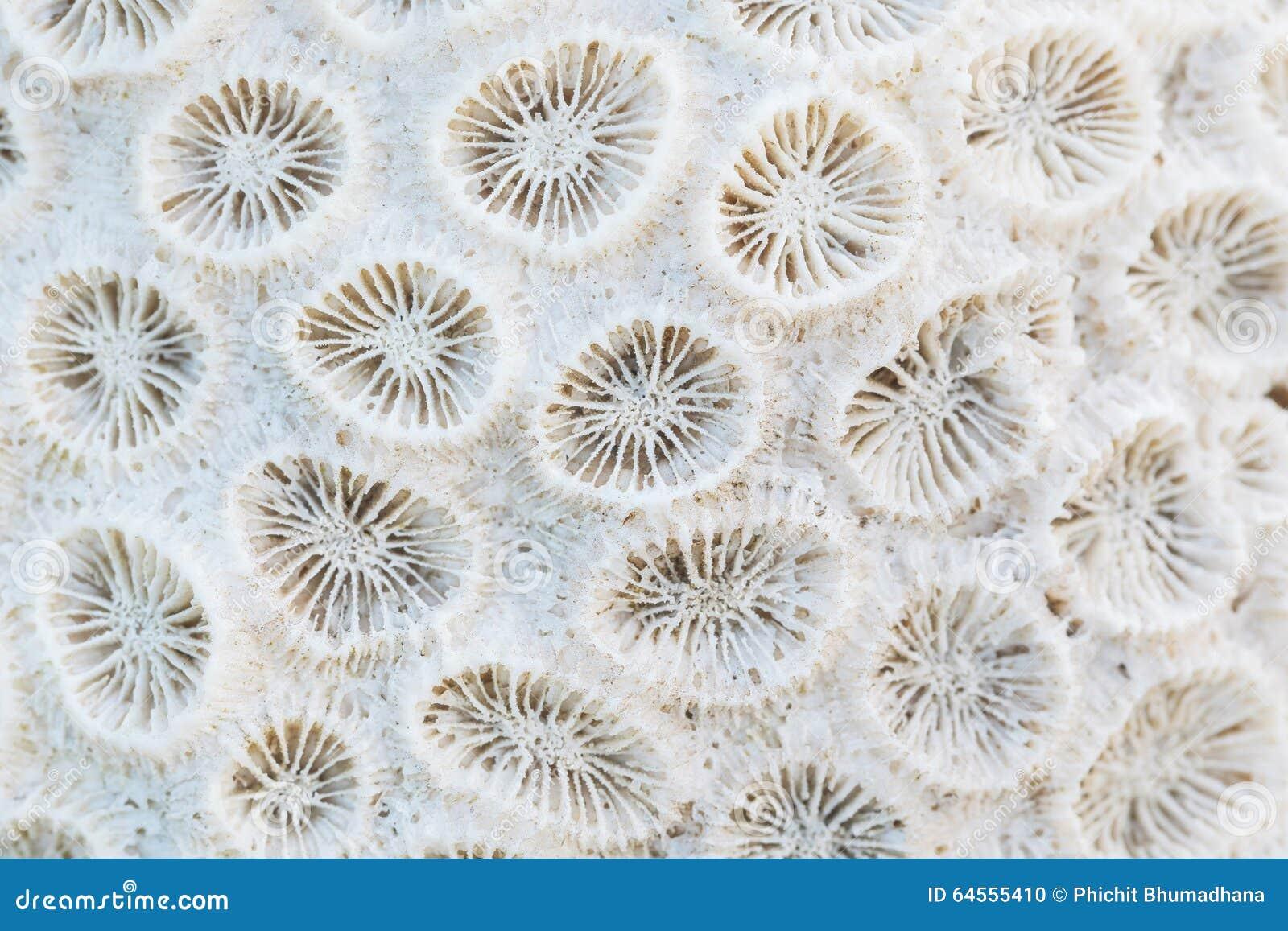 Коралл крупного плана