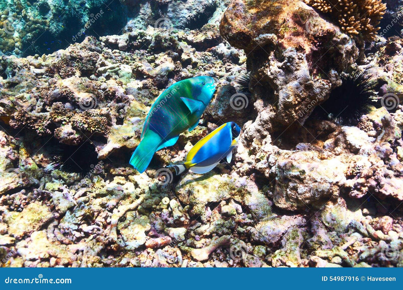 Коралловый риф и рыбы