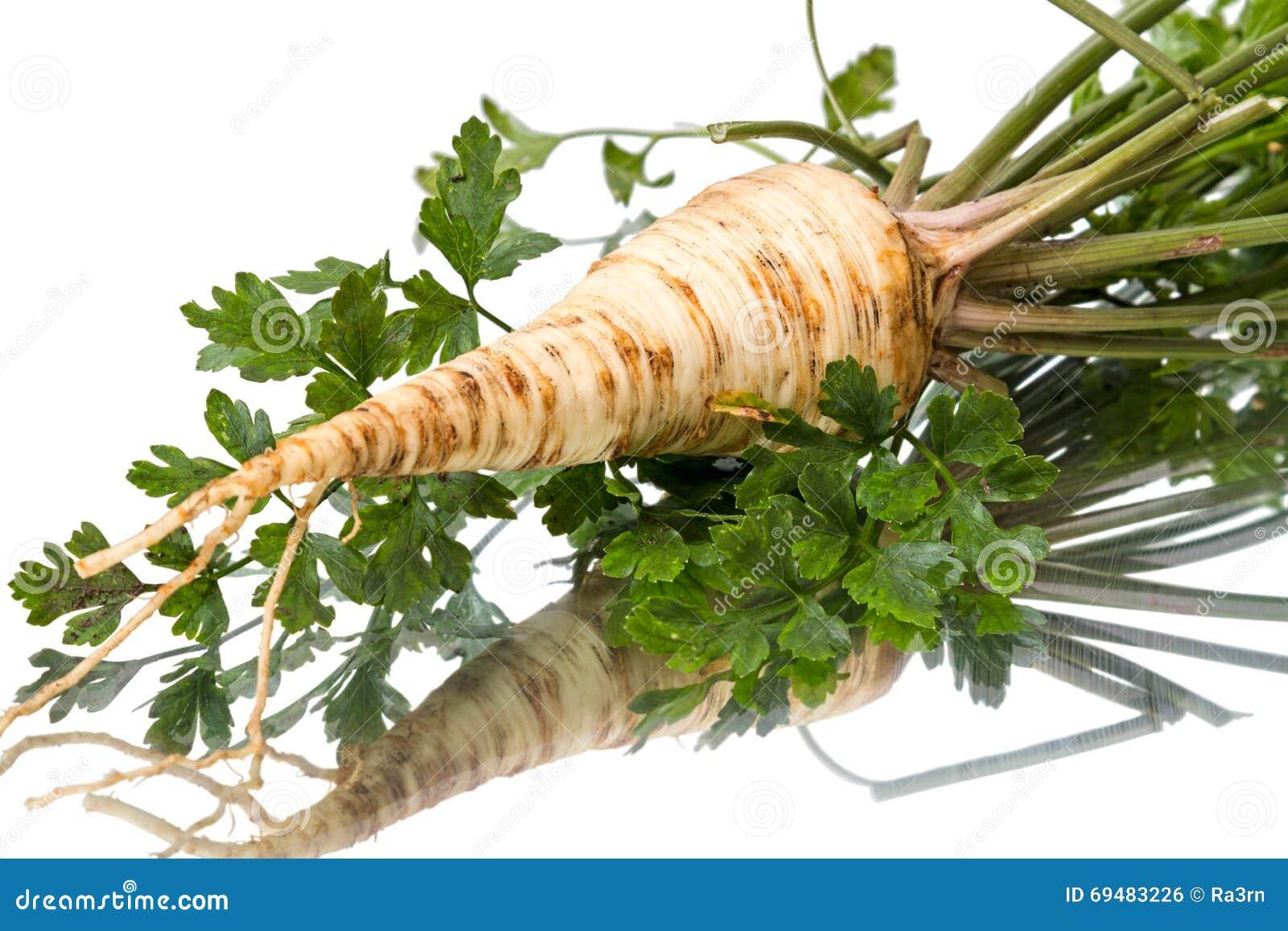 как выглядит корень петрушки